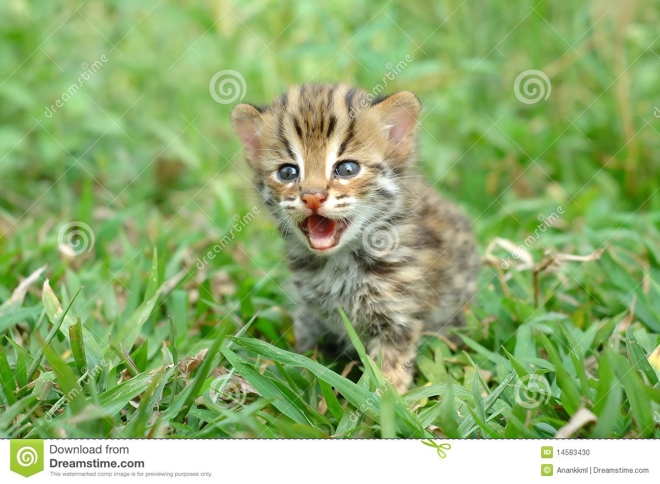 Baby Leopard Cat Stock Photo - Image: 14583430