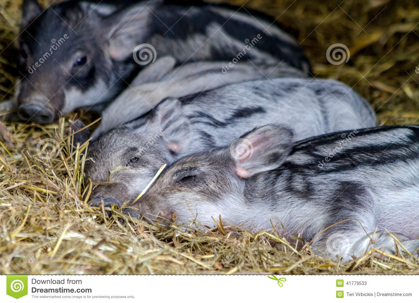 Organic Pork Baby Food