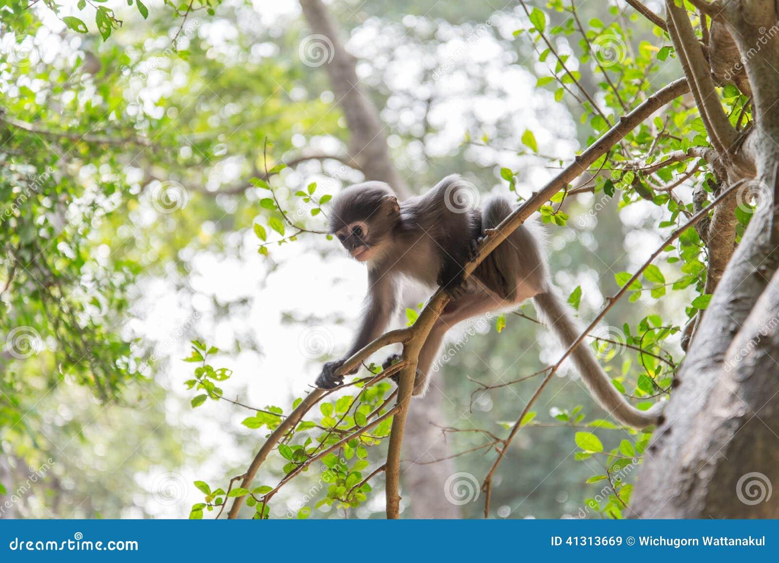 baby monkey is hanging on the tree stock photo image 41313669