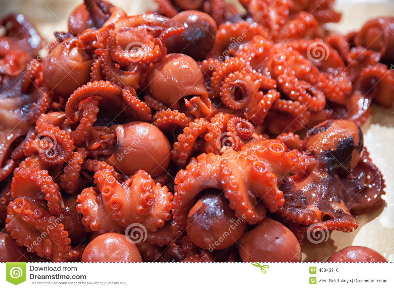 Baby Octopus For Sale Stock Photo - Image: 40843916