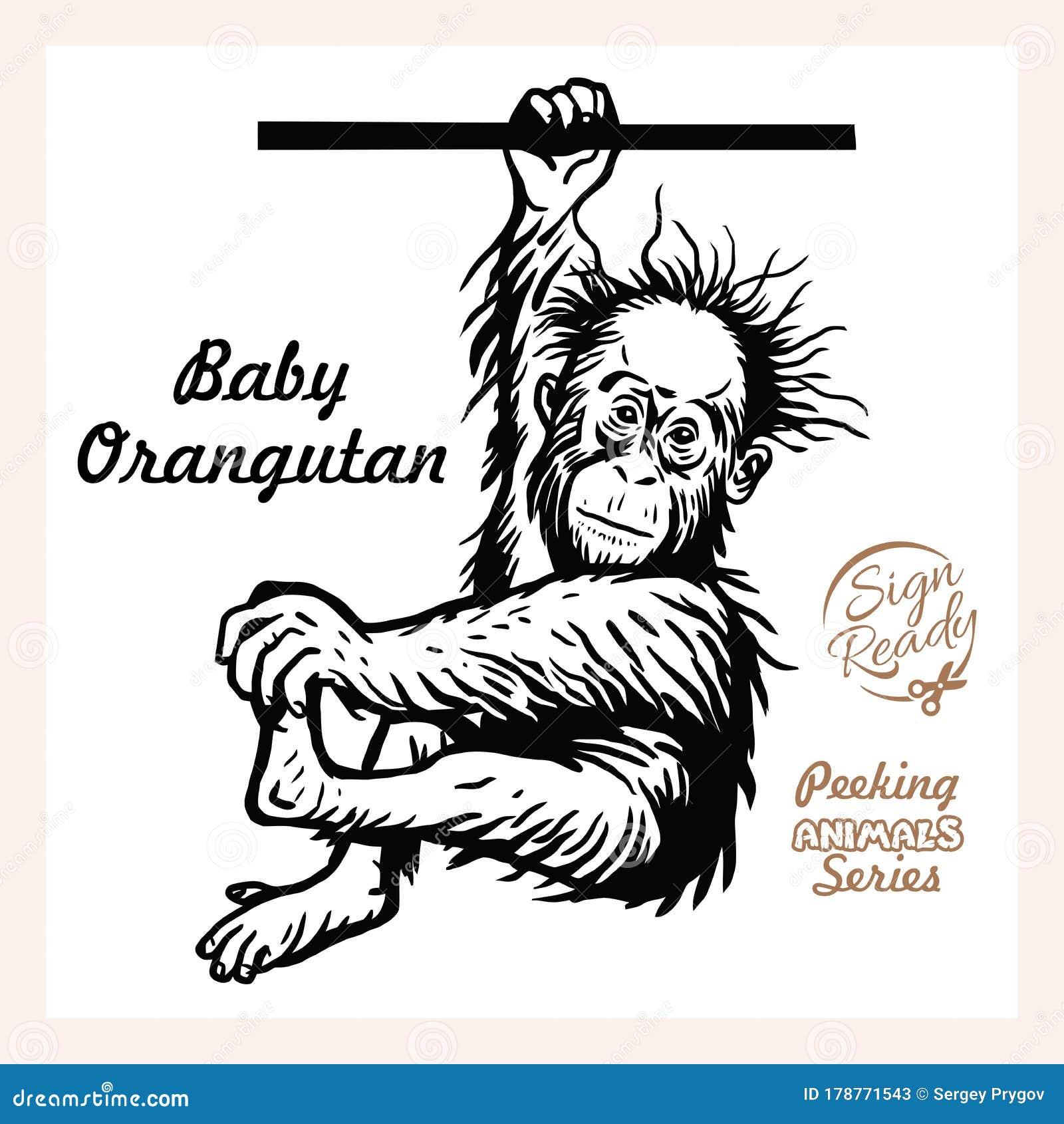 Cartoon Baby Orangutan Stock Illustrations 503 Cartoon Baby Orangutan Stock Illustrations Vectors Clipart Dreamstime