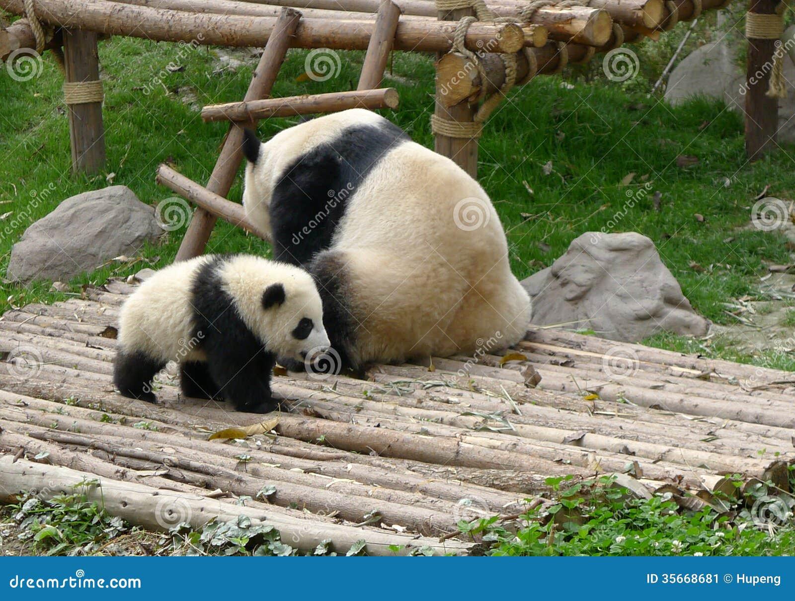 Newborn panda and mom - photo#31