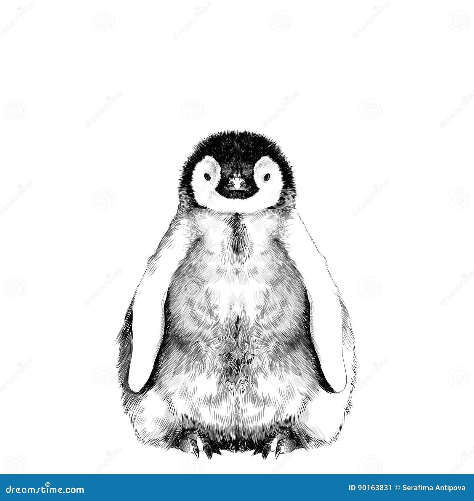 Baby penguin sketch