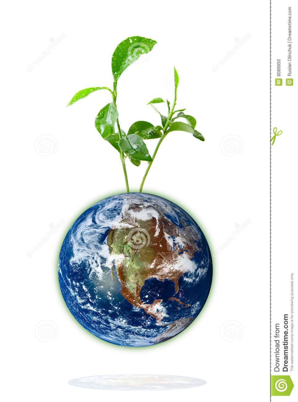 Baby Plant Growing From The Earth Stock Photo Image 8089950