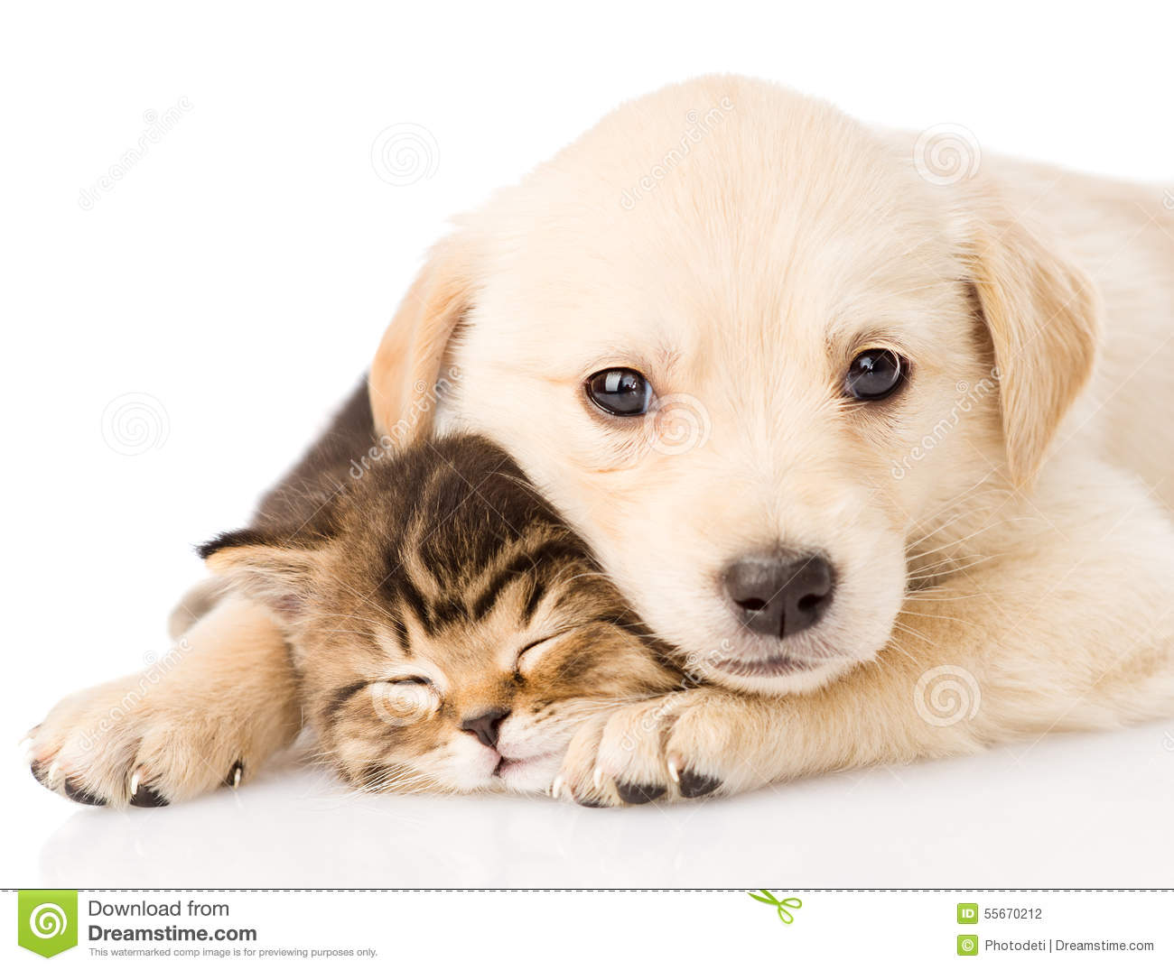 Baby puppy dog and little kitten together. isolated on white