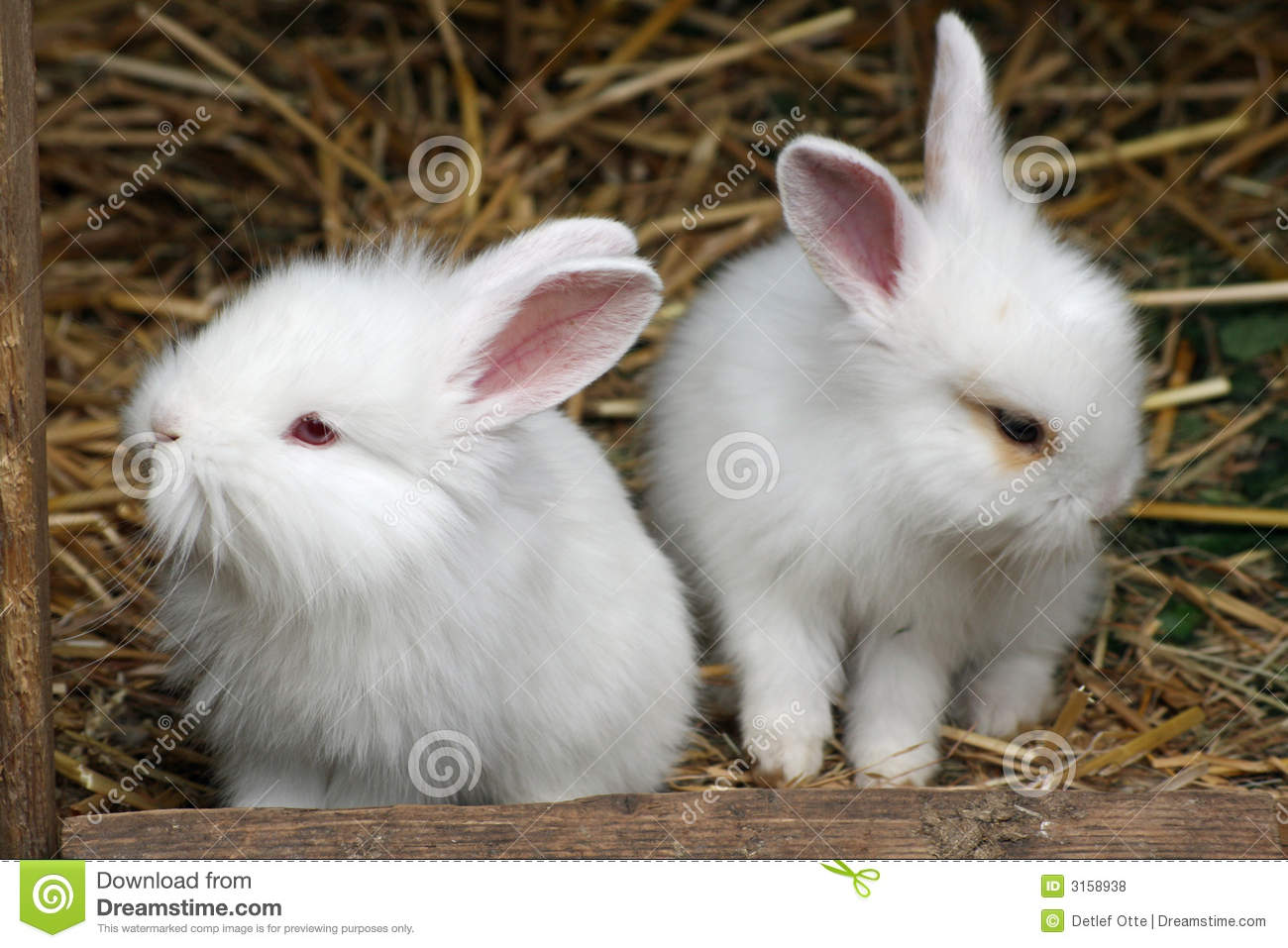 Baby Rabbit Royalty Free Stock Photos - Image: 3158938
