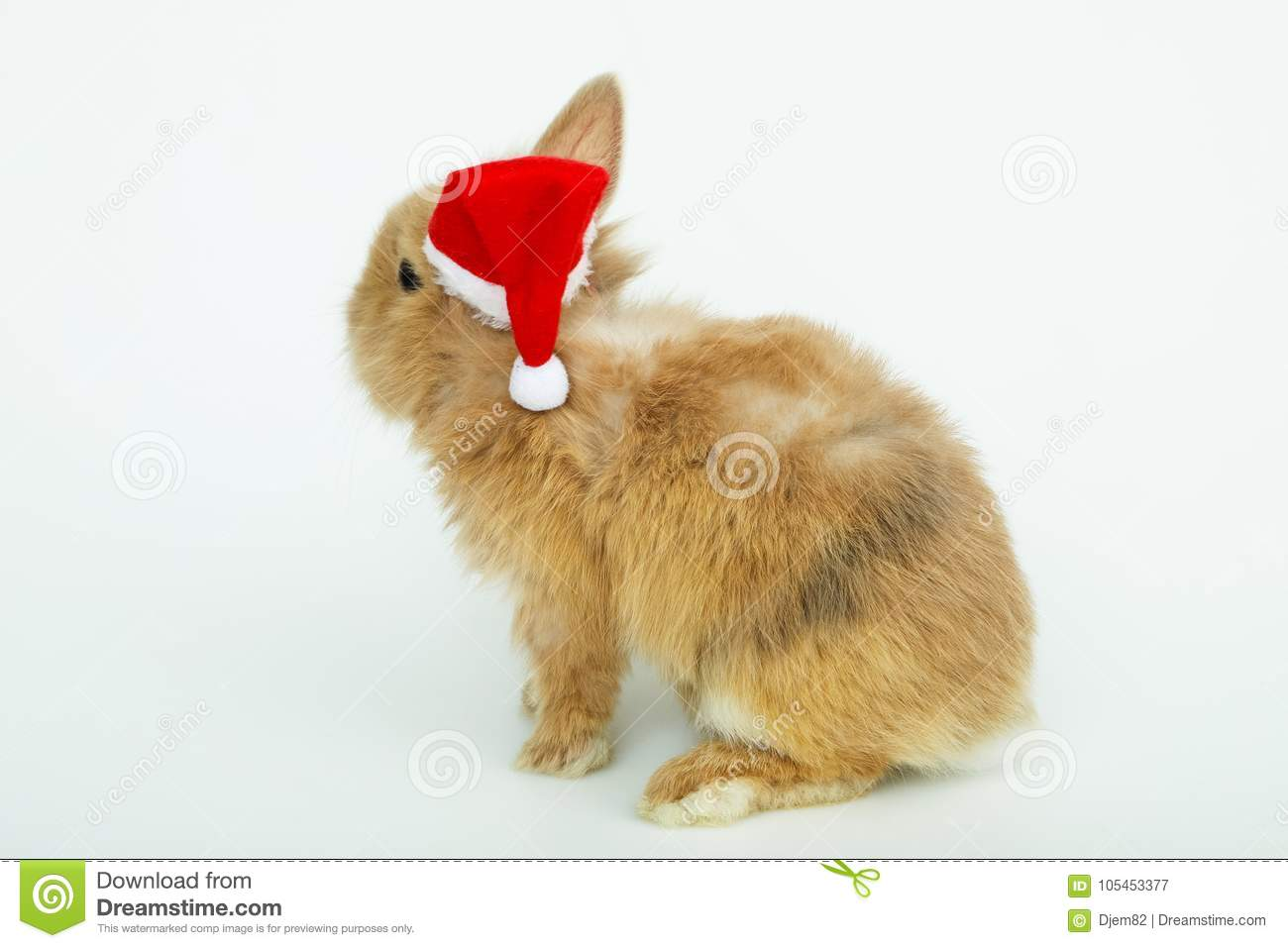 Download Baby Rabbit With A Christmas Hat Stock Image - Image of costume soft & Baby Rabbit With A Christmas Hat Stock Image - Image of costume ...