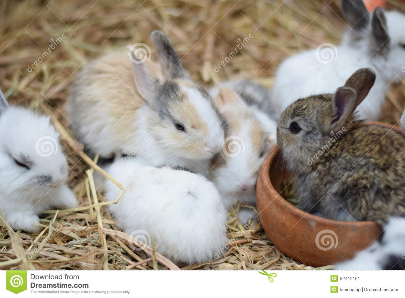 Baby Rabbits In Variety Colors Black Brown And White On ...
