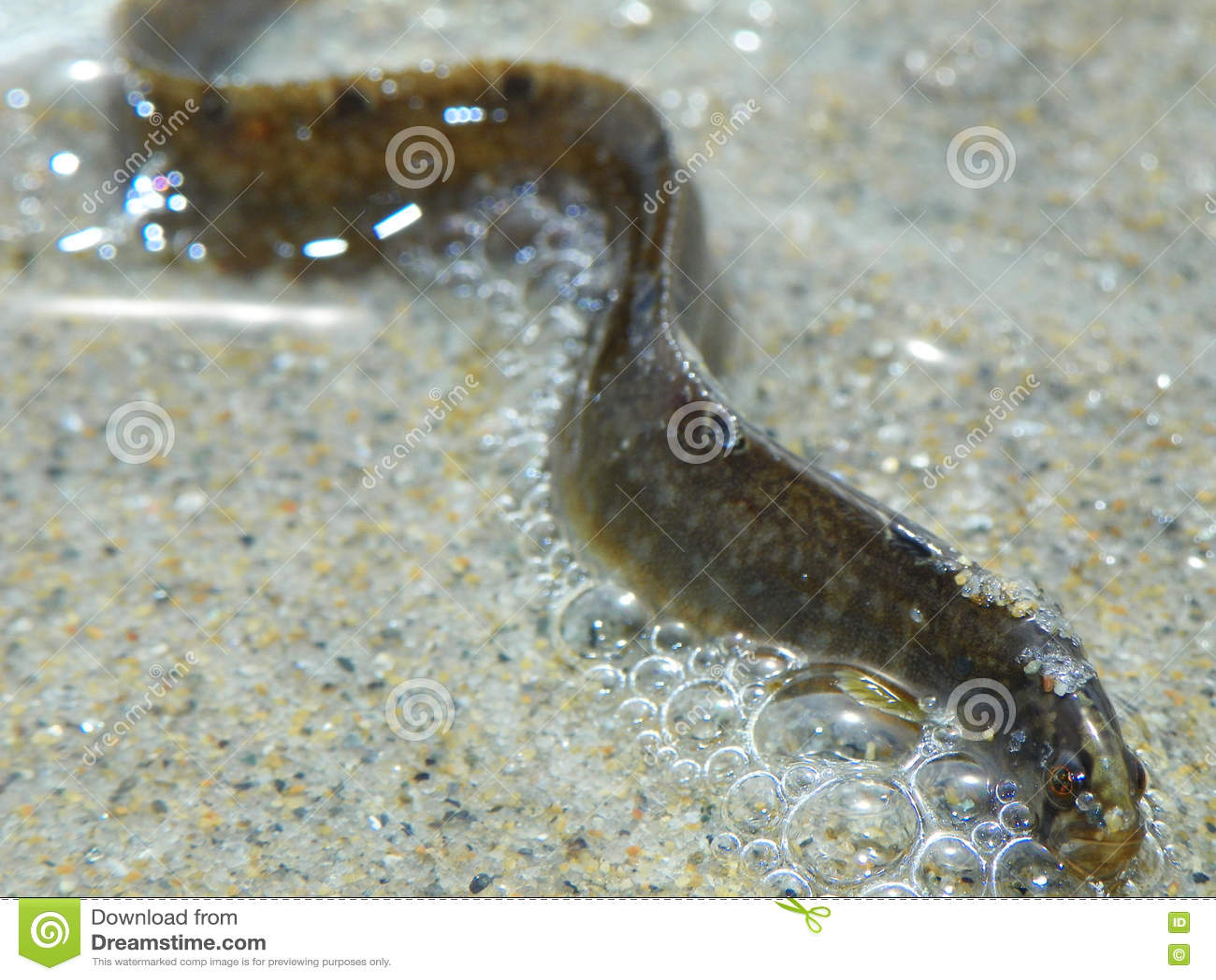 12 Gummifische larve Insekt Stonefly FISHUP 21mm Forellenangeln Döbel
