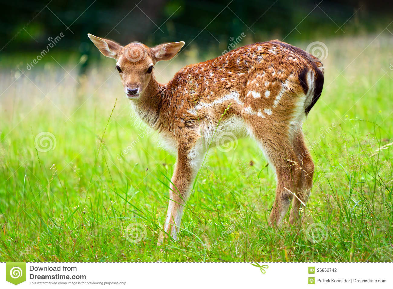 Baby Roe Deer Stock Photography - Image: 26862742