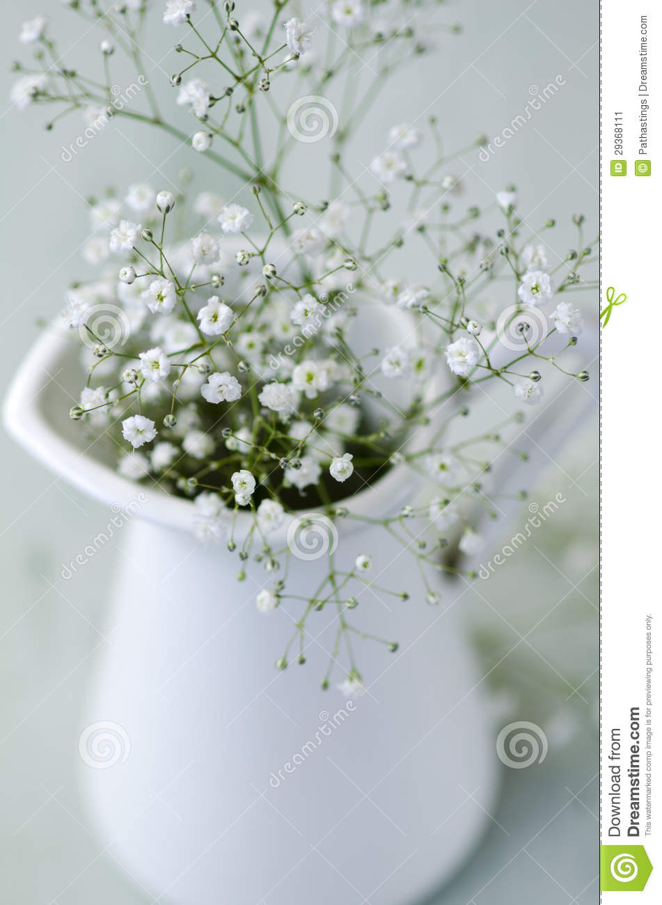 https://thumbs.dreamstime.com/z/baby-s-breath-flowers-arrangement-29368111.jpg