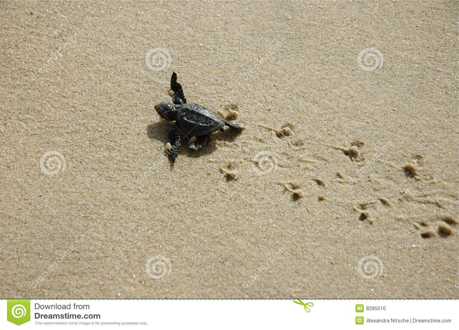 how to break up wet sand