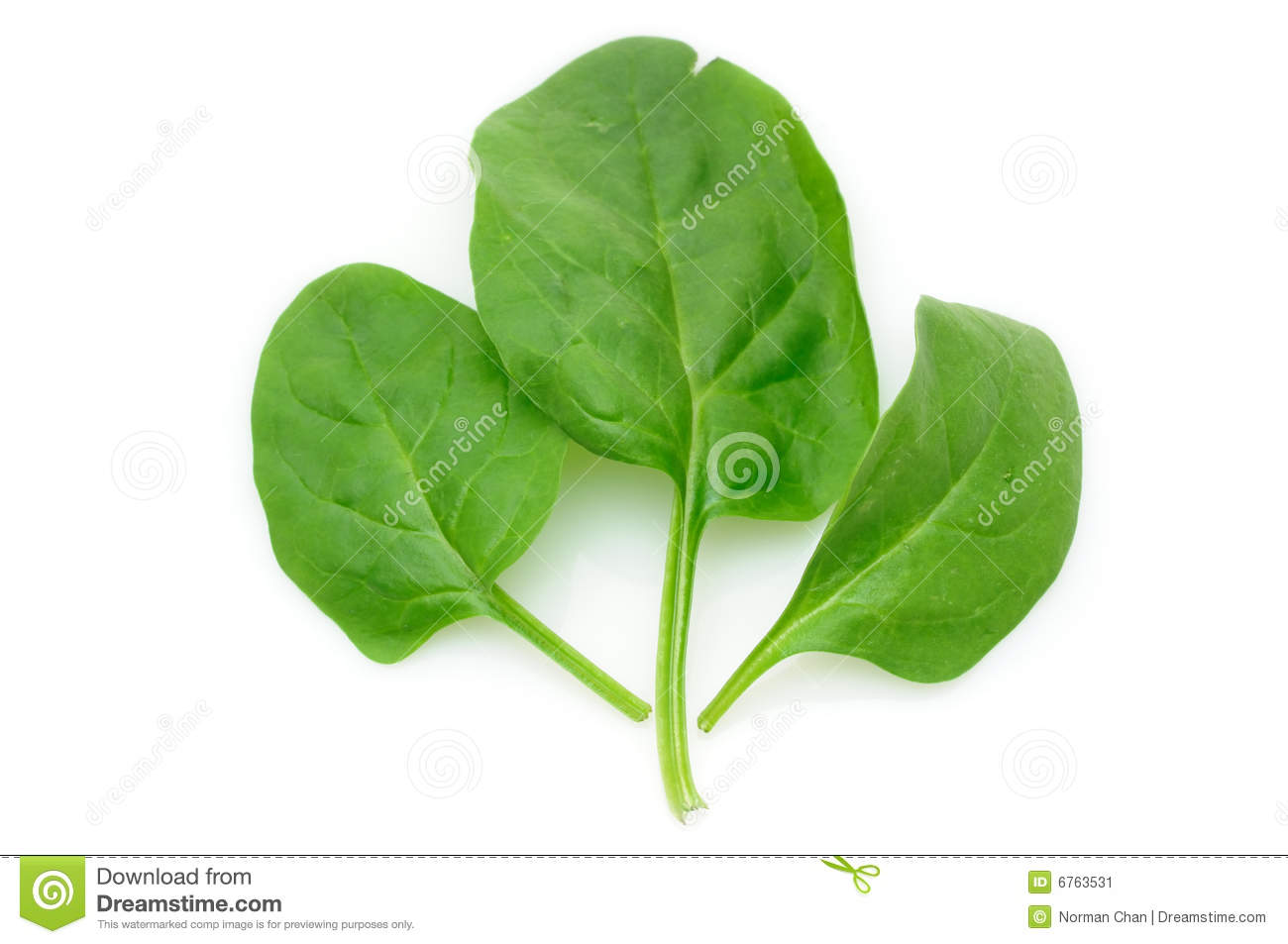 photosynthesis in spinach leaves Leaf structure and pigments the objectives of this lab exercise are that you: • learn about the roles of pigments in photosynthesis and other functions of plants pigments found in spinach leaf describe the visual coloration of this leaf.