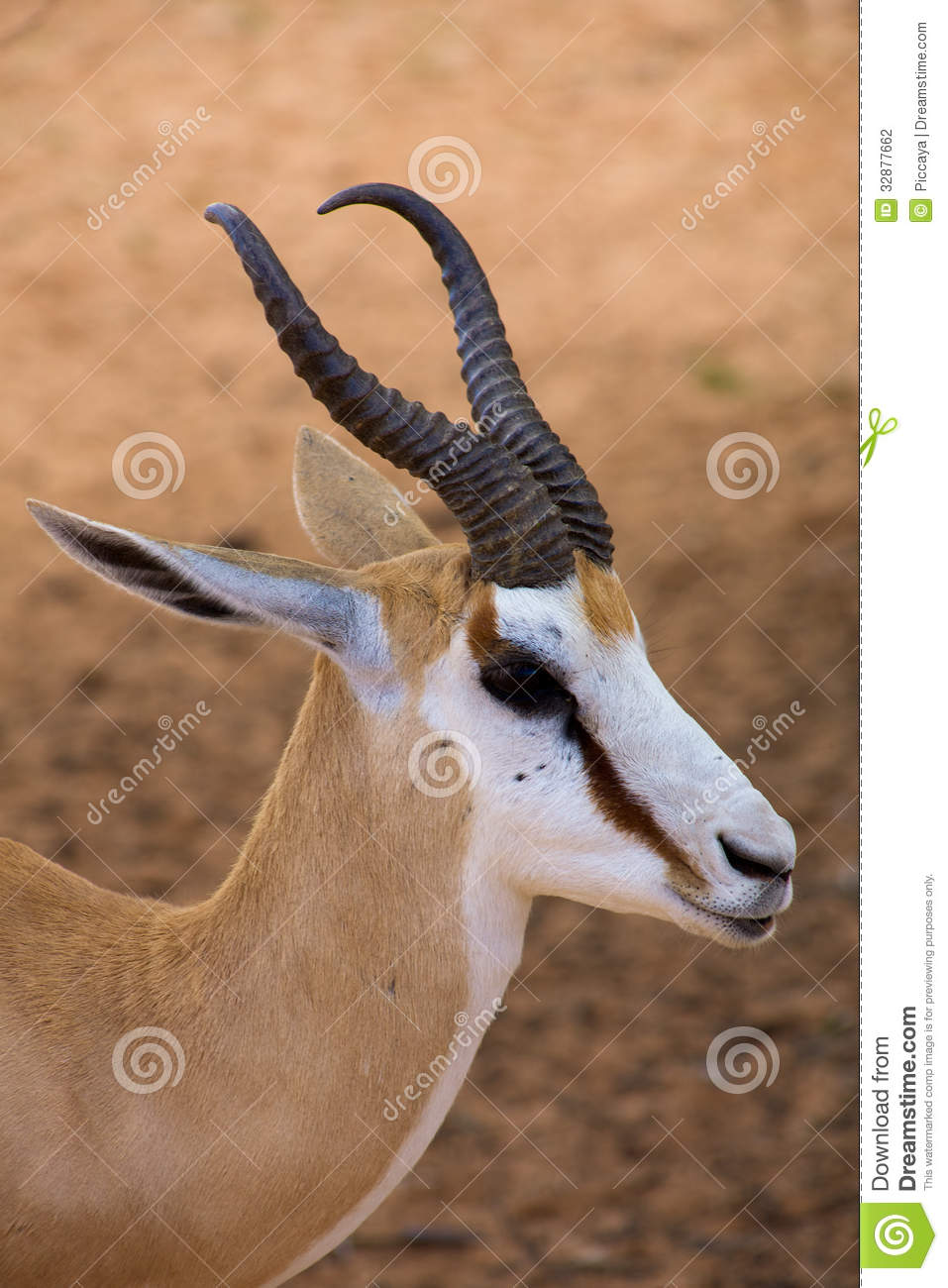 clipart springbok - photo #20