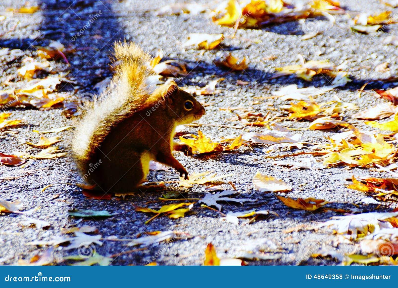 Baby Squirrel in Autumn