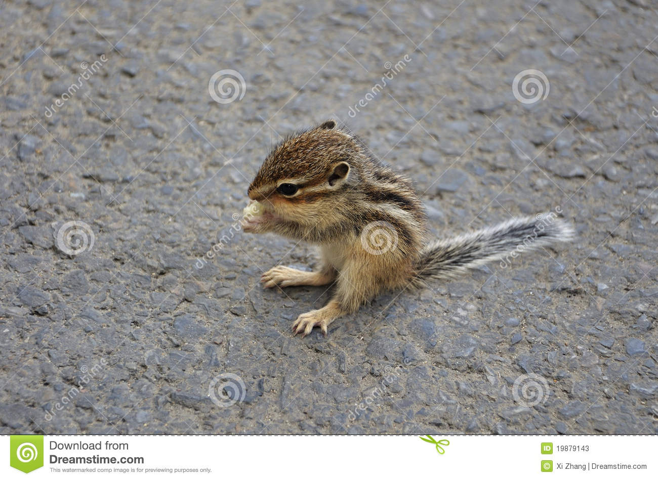 Baby Squirrel Eating