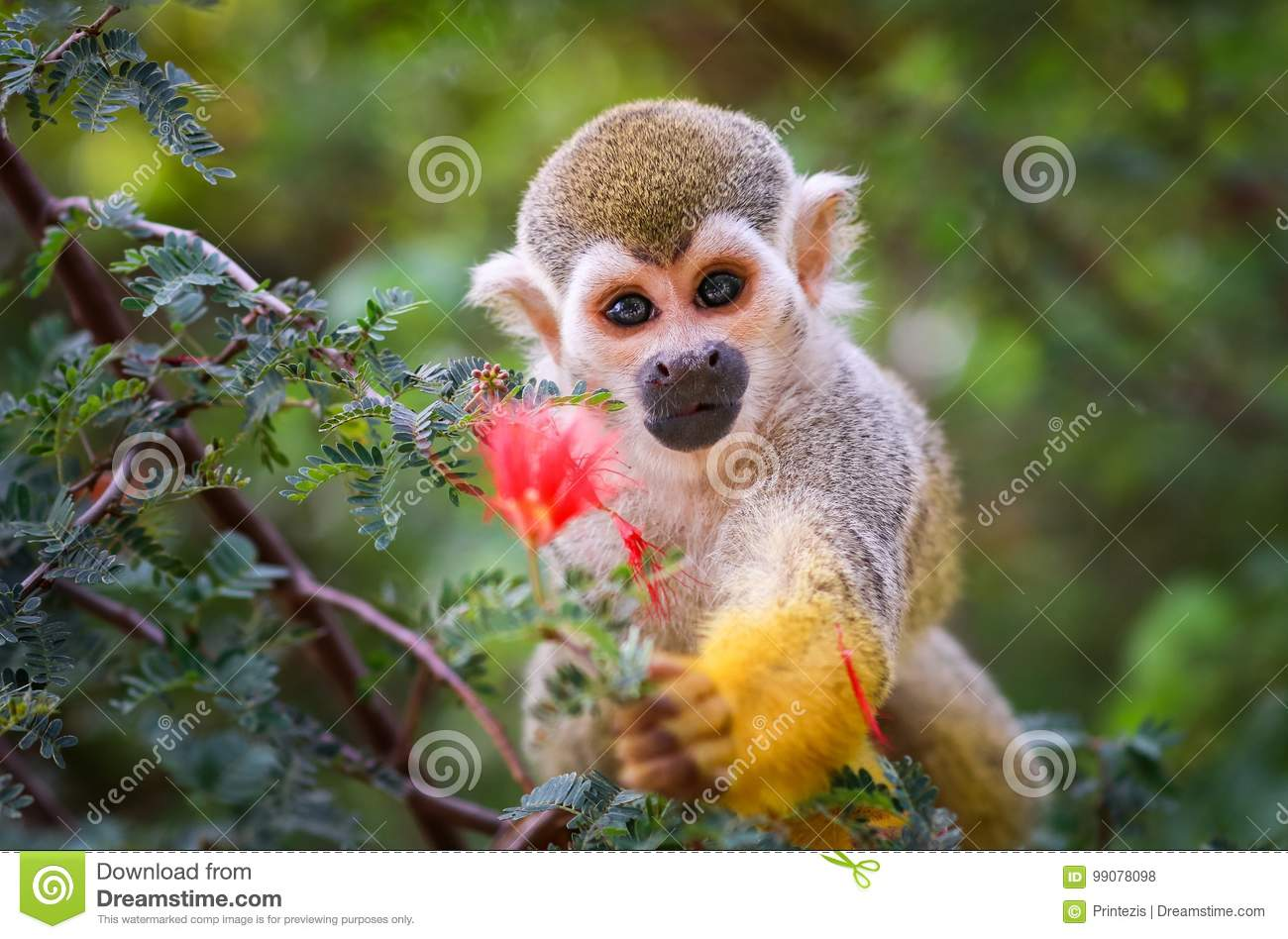 Baby Squirrel Monkey and Flower !