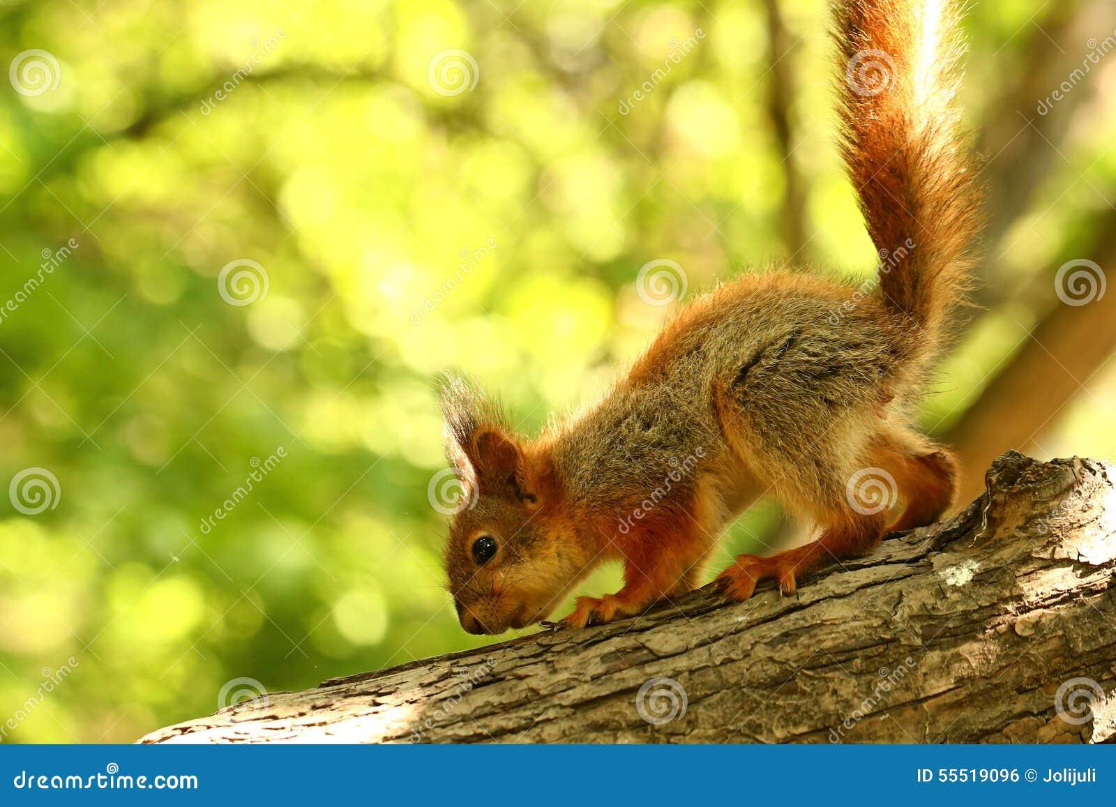 Baby Tree Squirrel