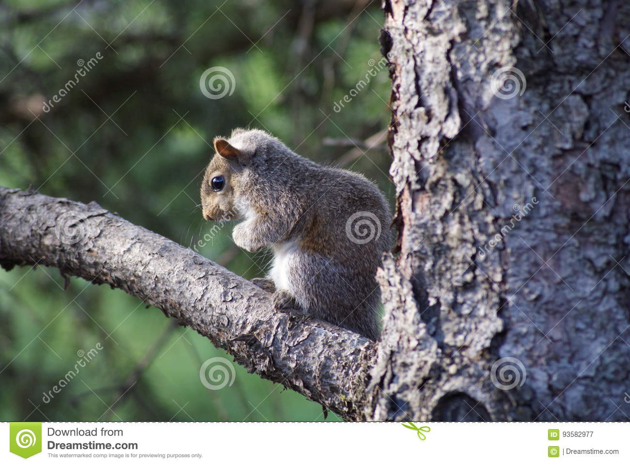 Baby Squirrel In The Tree