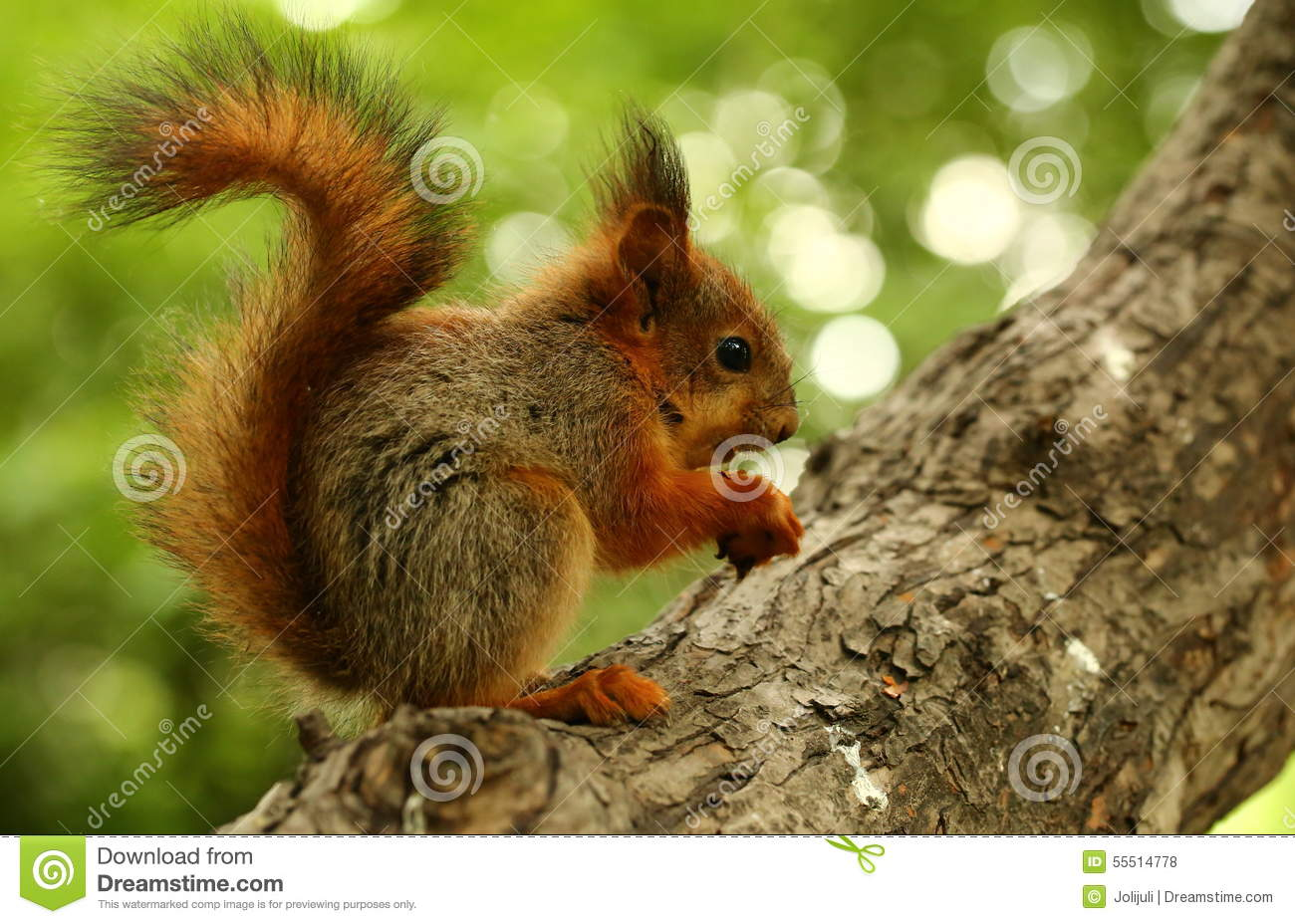 Baby Squirrel On A Tree Stock Photo - Image: 55514778