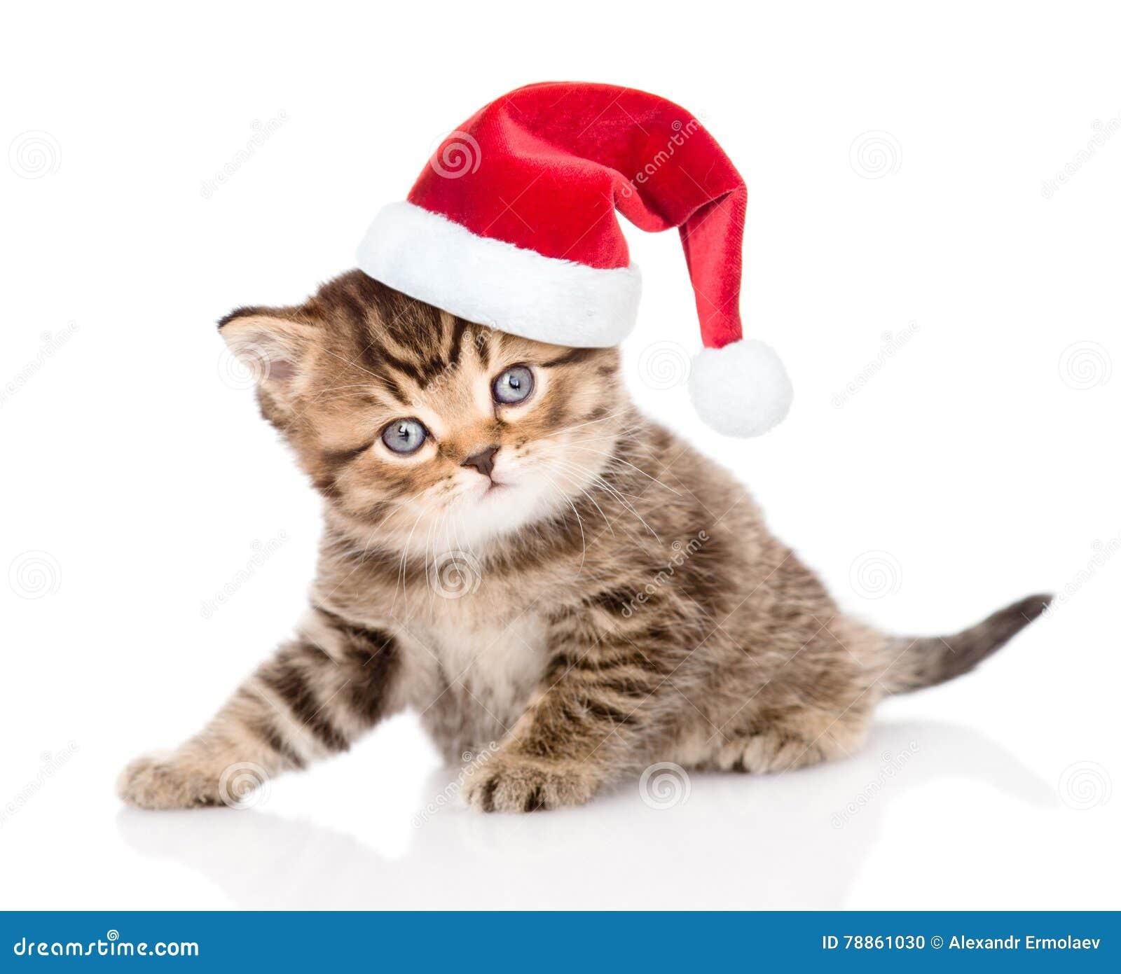 Tiny Santa Hat Cat