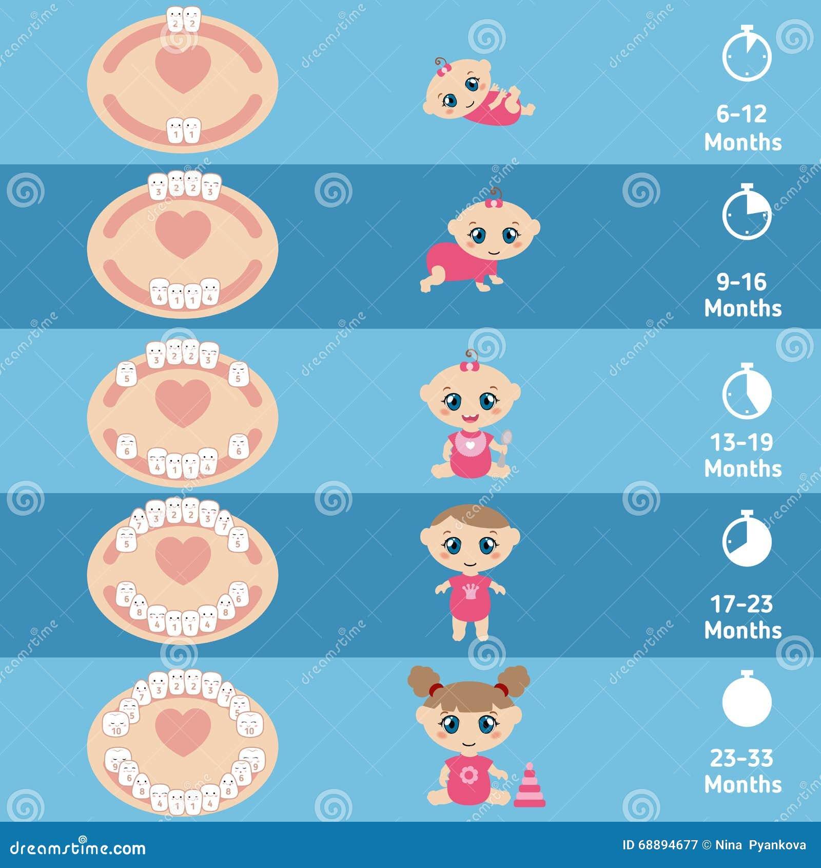 Baby Teething Chart Stock Vector - Image: 68894677