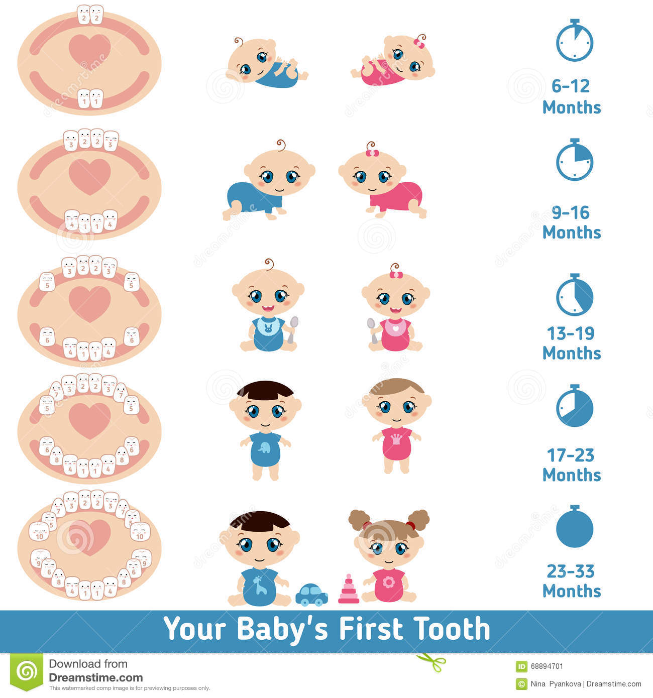 Baby Teething Chart Stock Vector - Image: 68894701