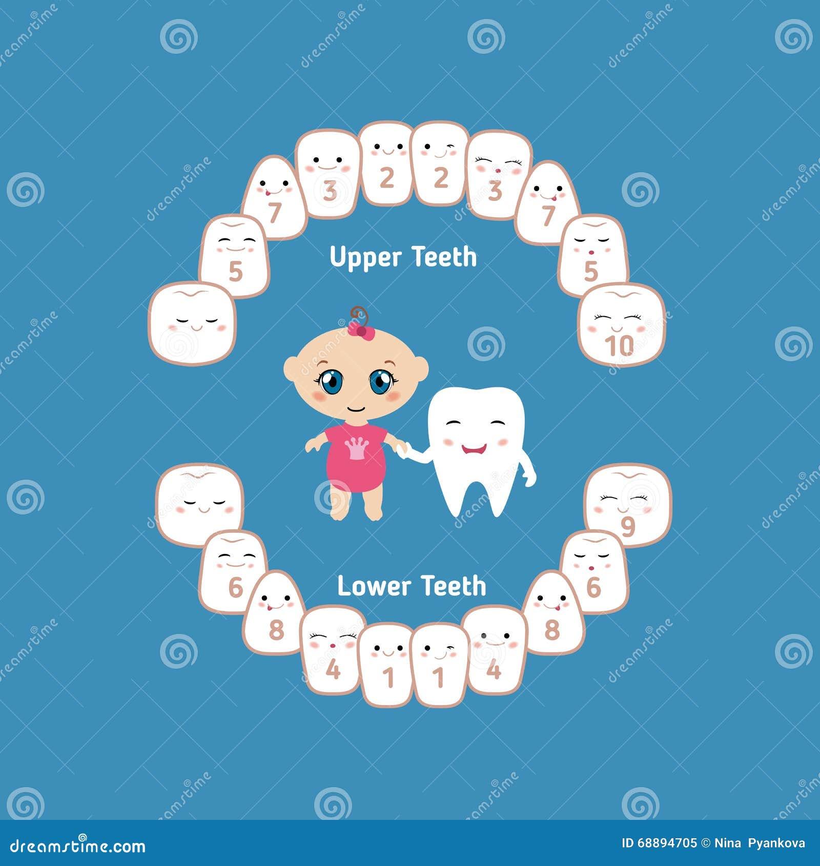 Baby Teeth Chart | Baby Teething Chart Stock Vector Illustration Of Chart 68894705