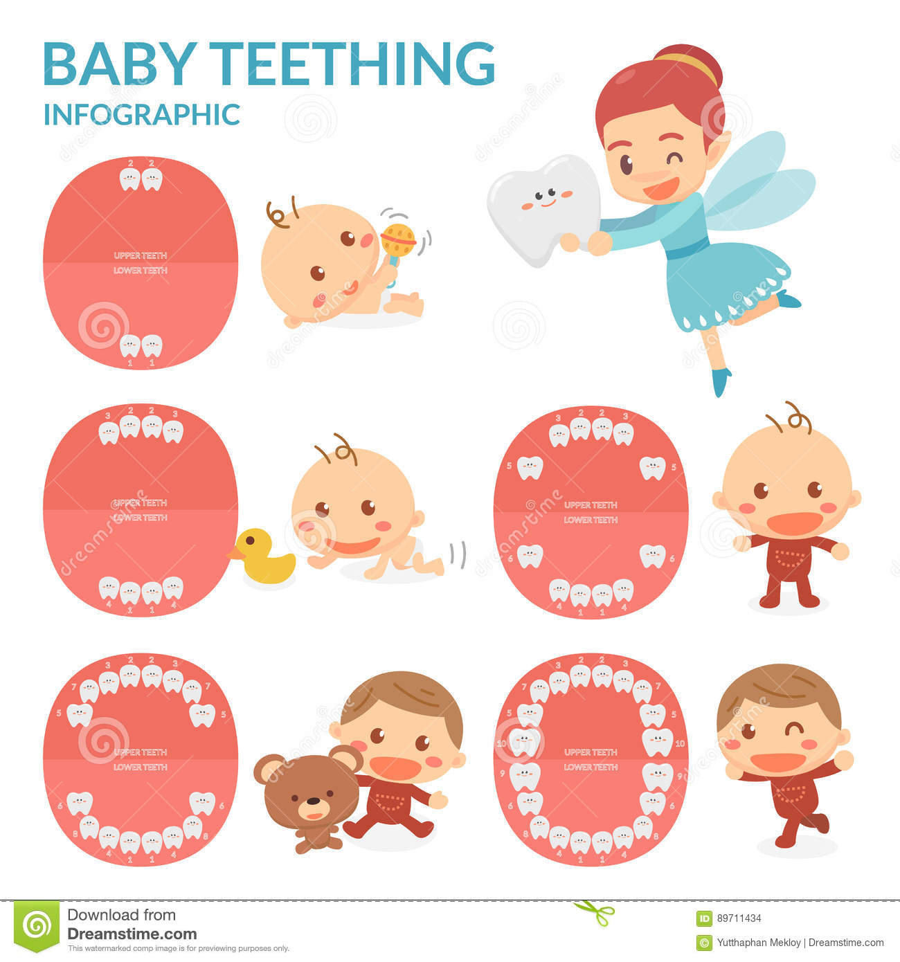 Baby Teething Tooth Fairy Period Of Eruption And Shedding Of Baby