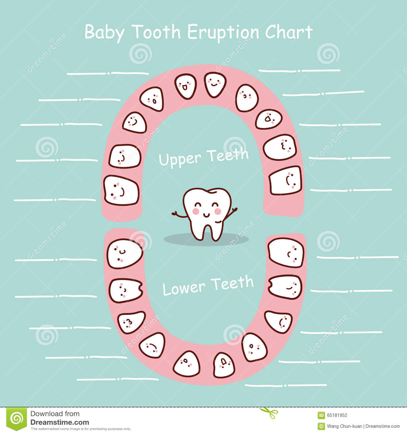 Baby Tooth Chart Record Stock Vector - Image: 65181952
