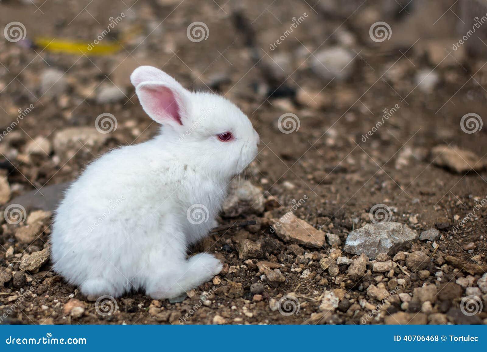 Baby white rabbit stock photo. Image of rocks, standup ...