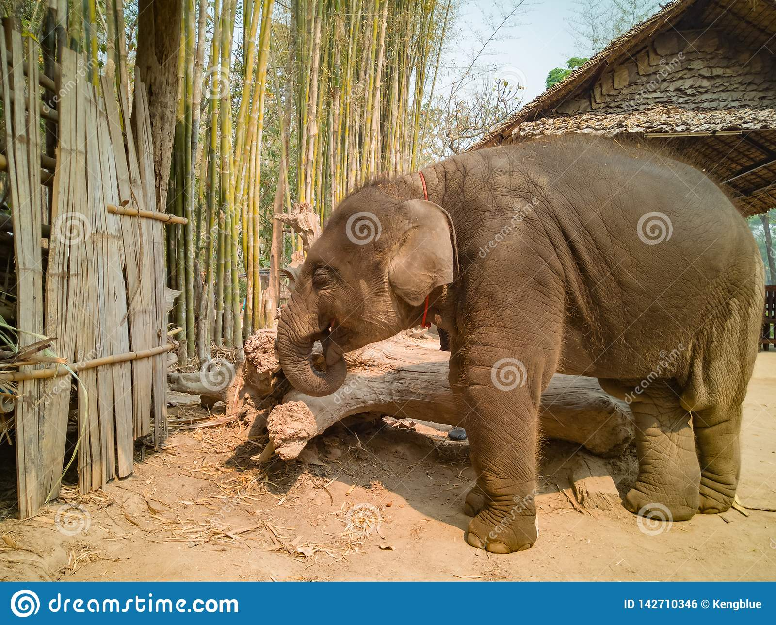 Babyelefant mit nasser Haut
