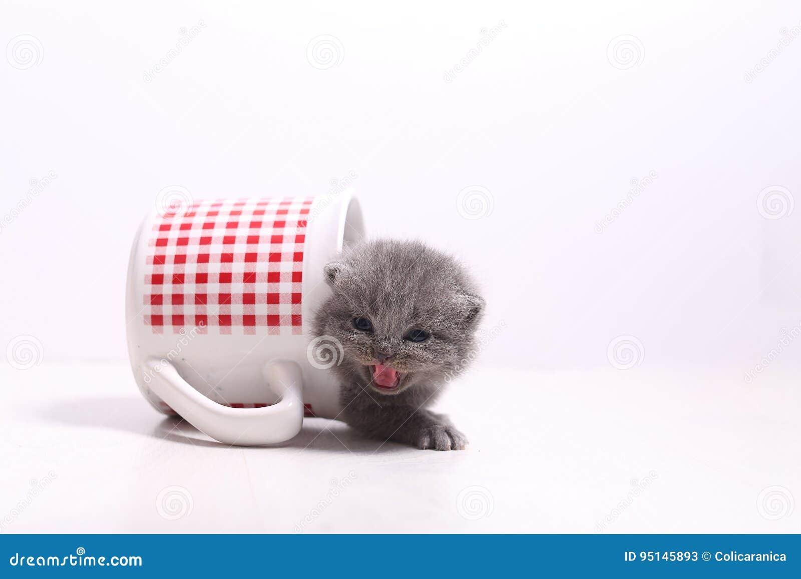 Babykat in een mok