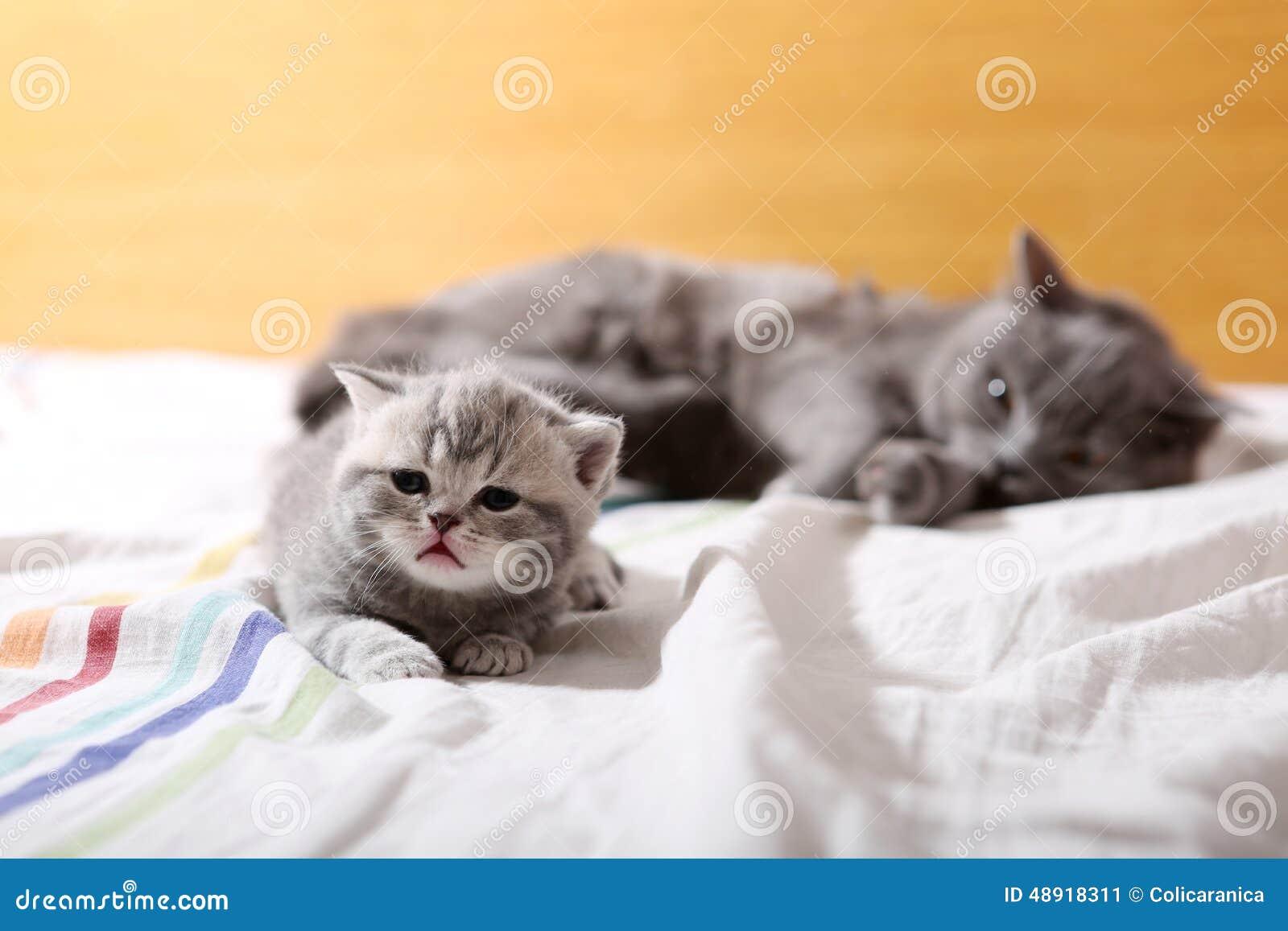 Babykatje, eerste dagen van het leven