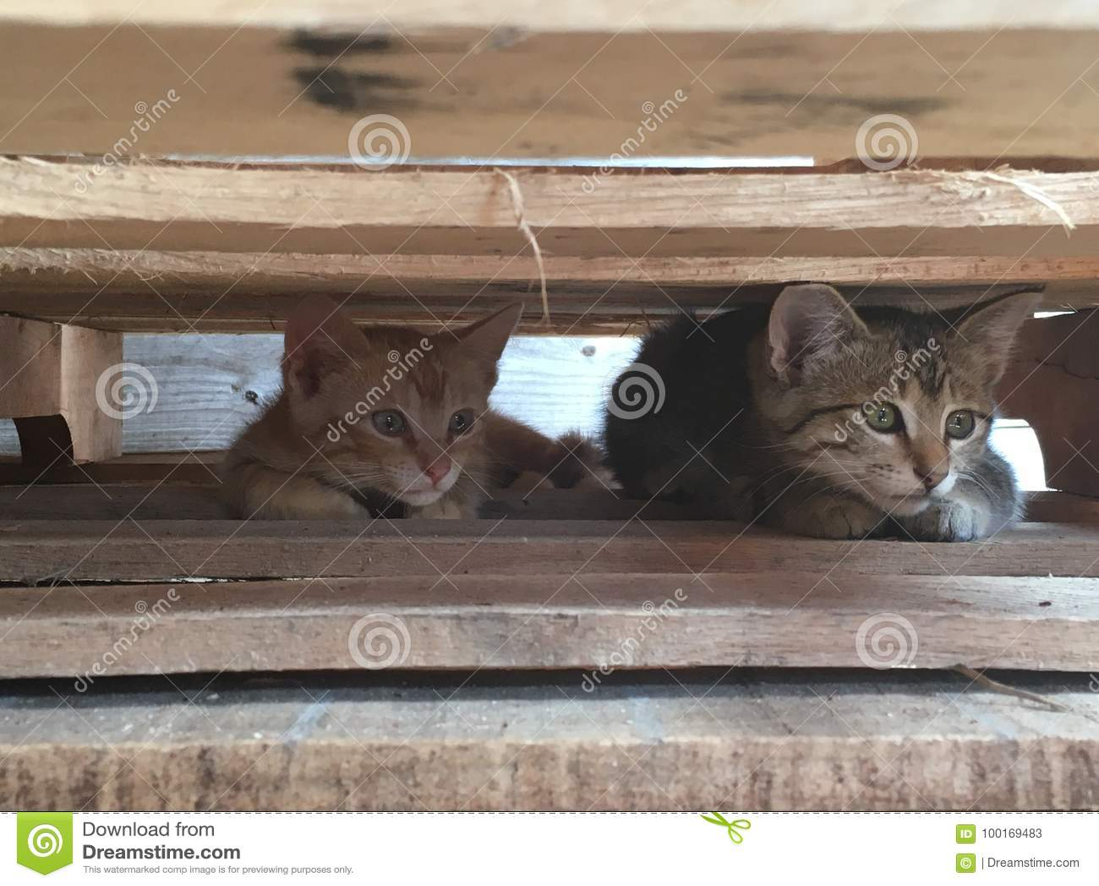 Babykatjes