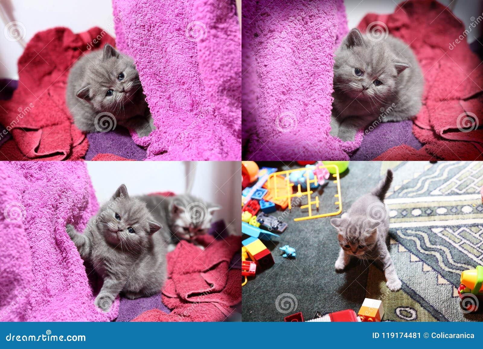 Babykatjes die op mauve handdoek spelen, multicam