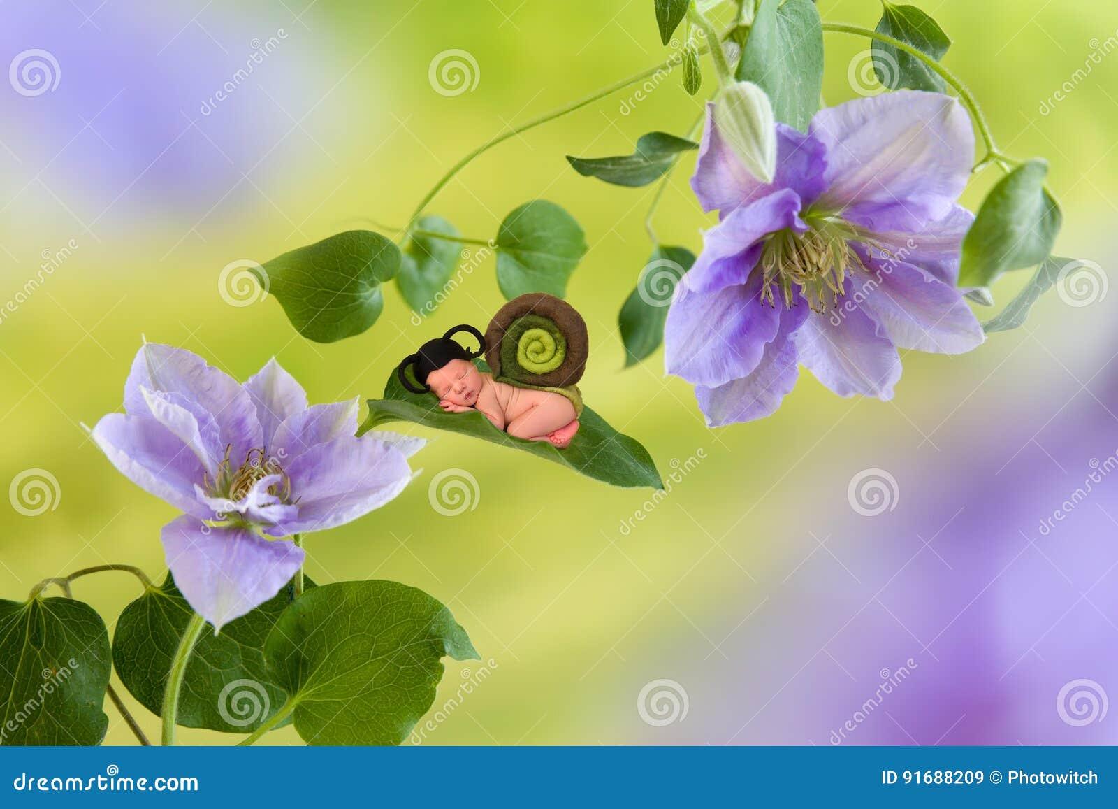 Babyschnecke auf Klematisblume