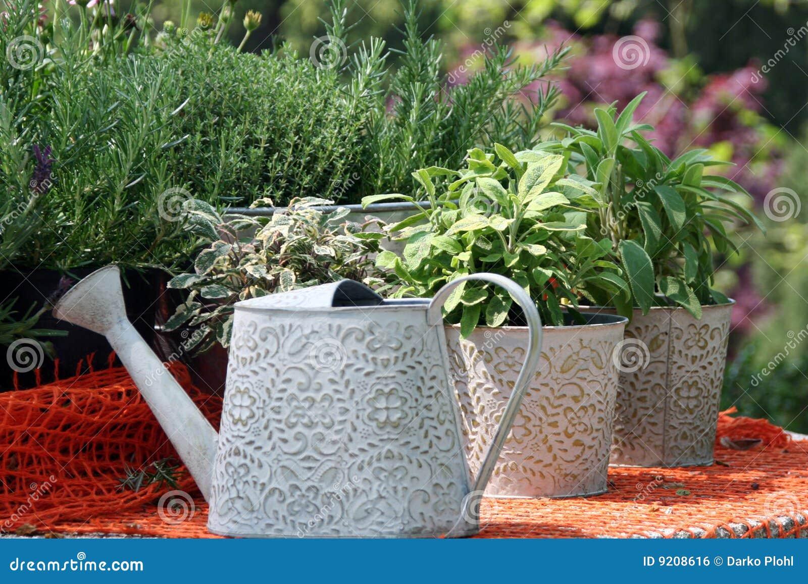 Bac d herbes