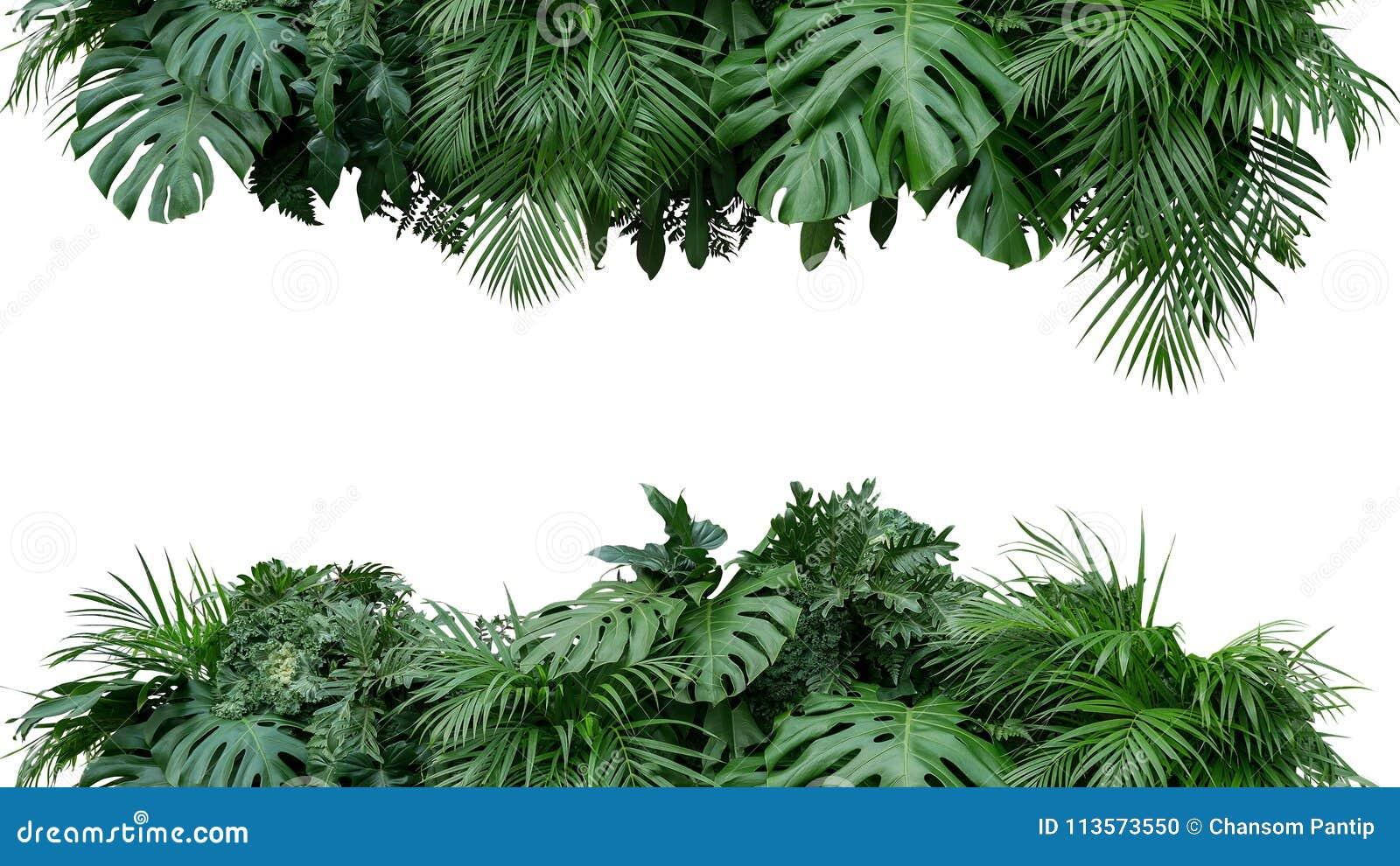 BAC tropicale della natura di disposizione floreale del cespuglio della pianta del fogliame delle foglie