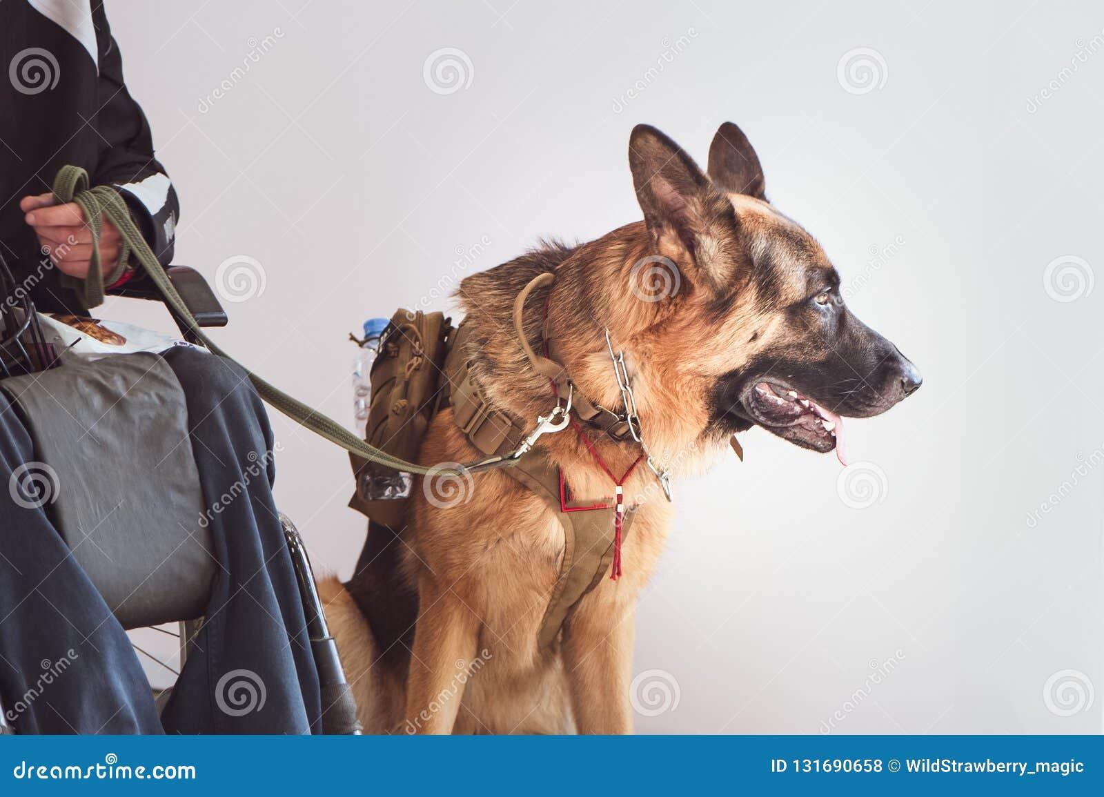 Baca, usługa pies z właścicielem nieważny