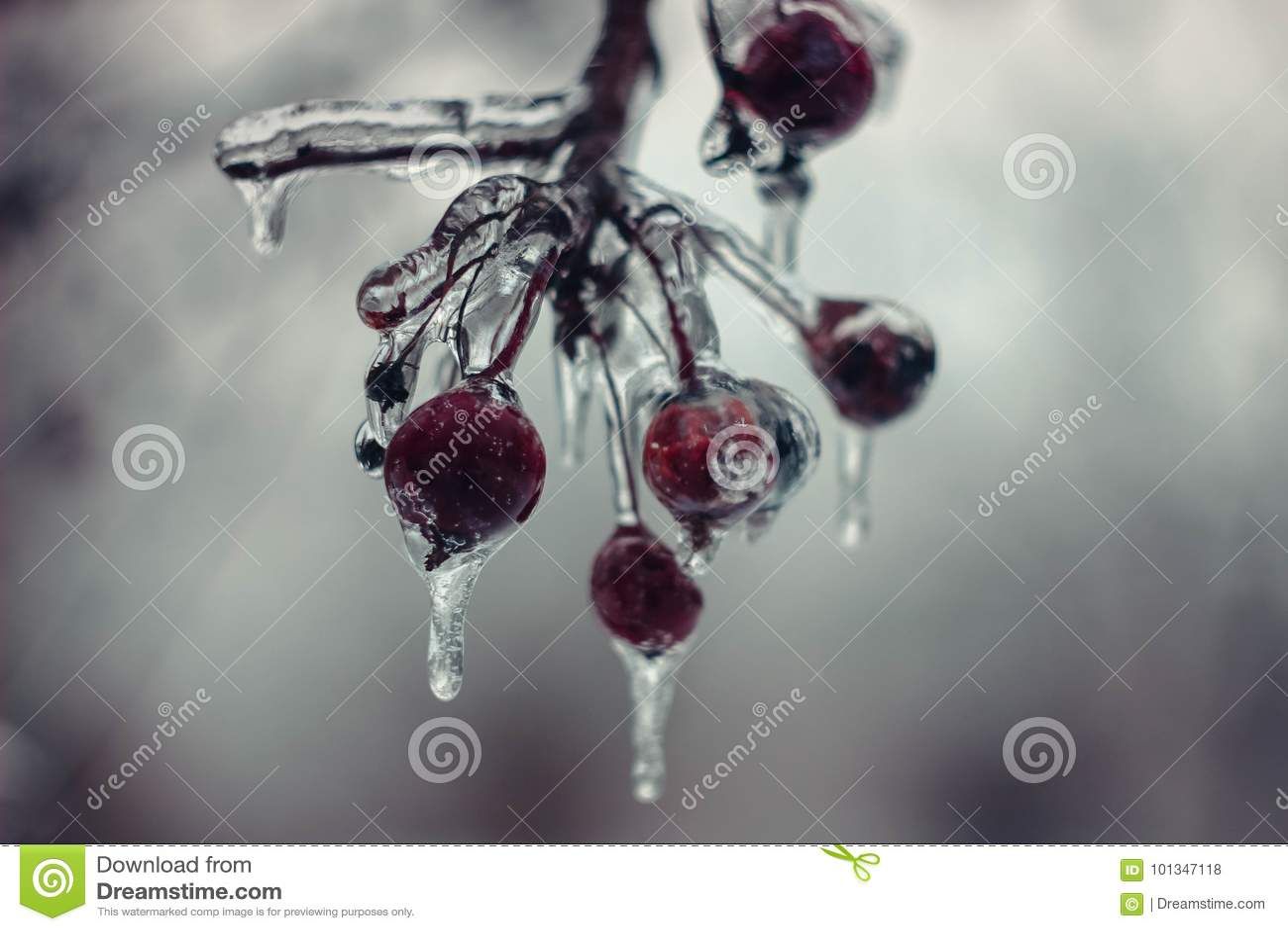 Bacca congelata