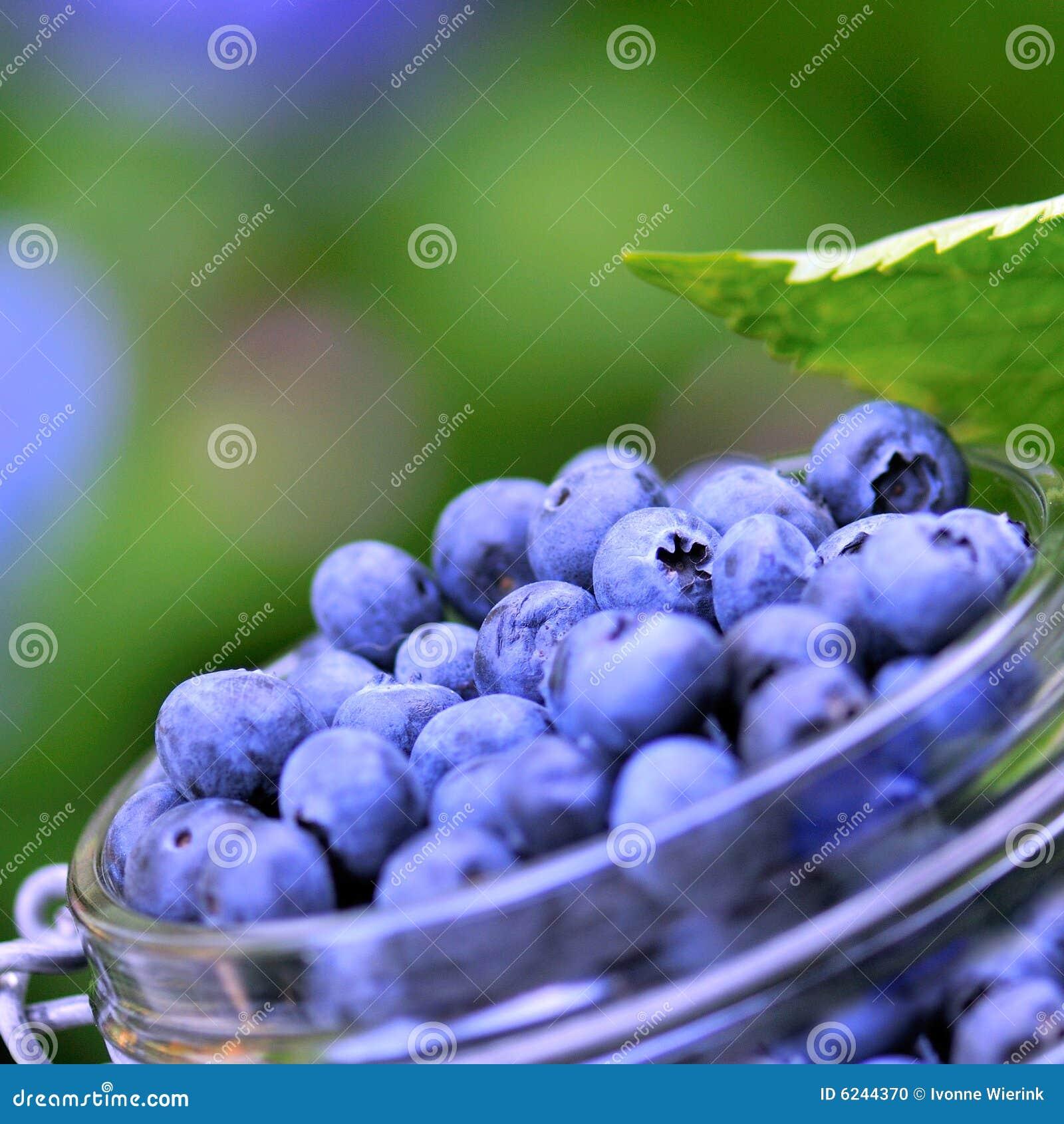 Bacche blu
