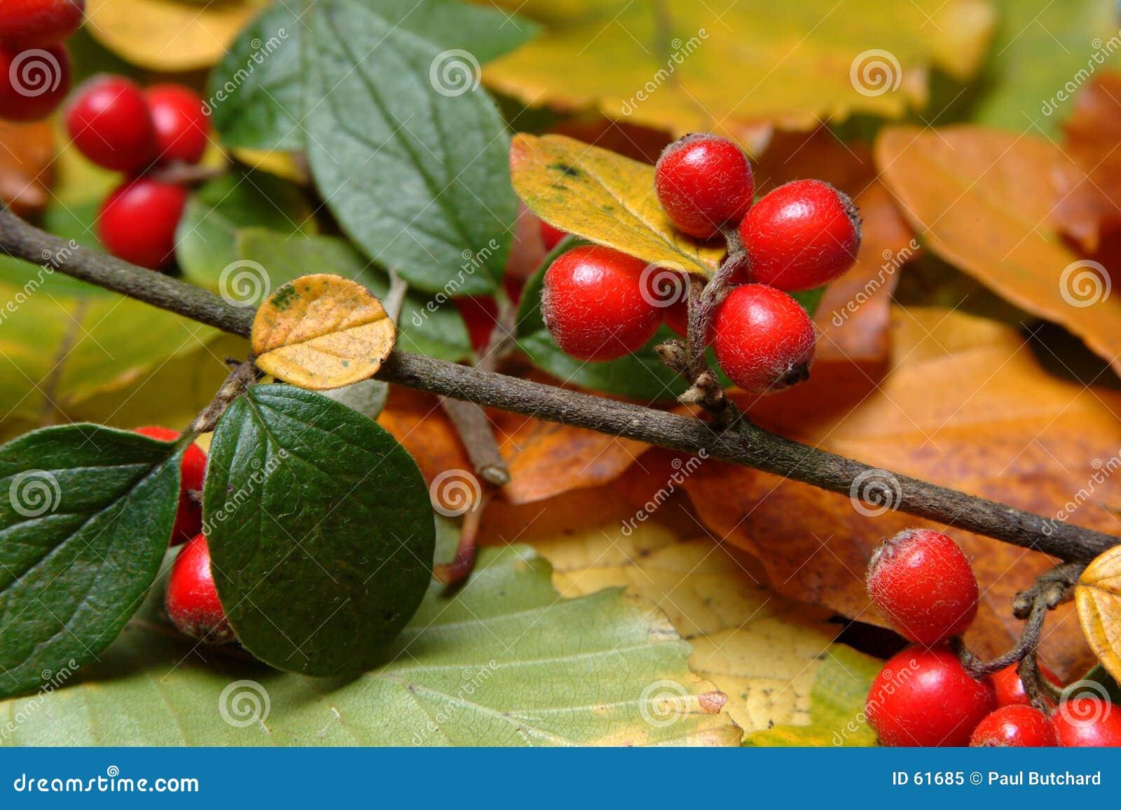 Bacche di autunno