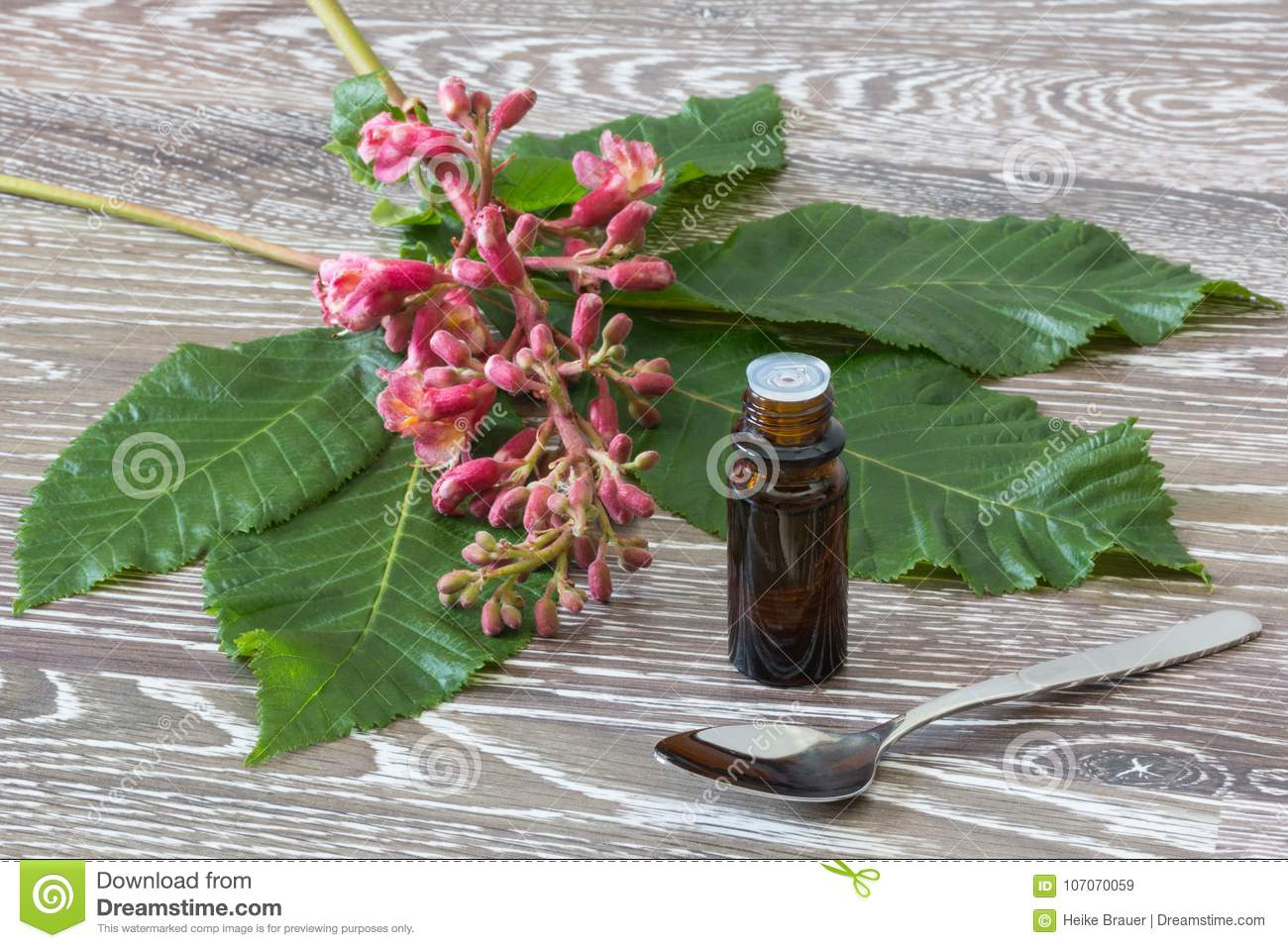 Red Chestnut Bach Flower Remedies Stock Image Image Of Bach