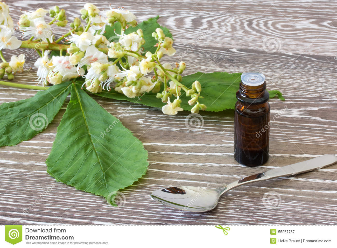 Bach flower remedies of white chestnut stock image image of blooms bach flower remedies of white chestnut mightylinksfo