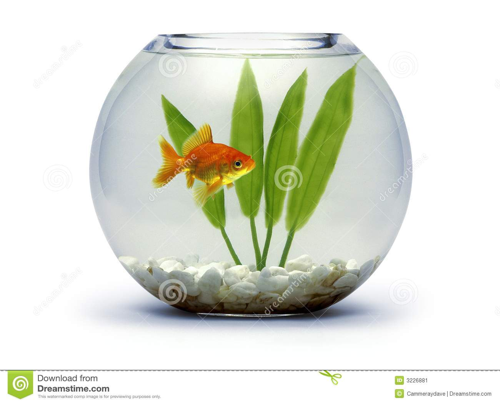 Bacia do Goldfish