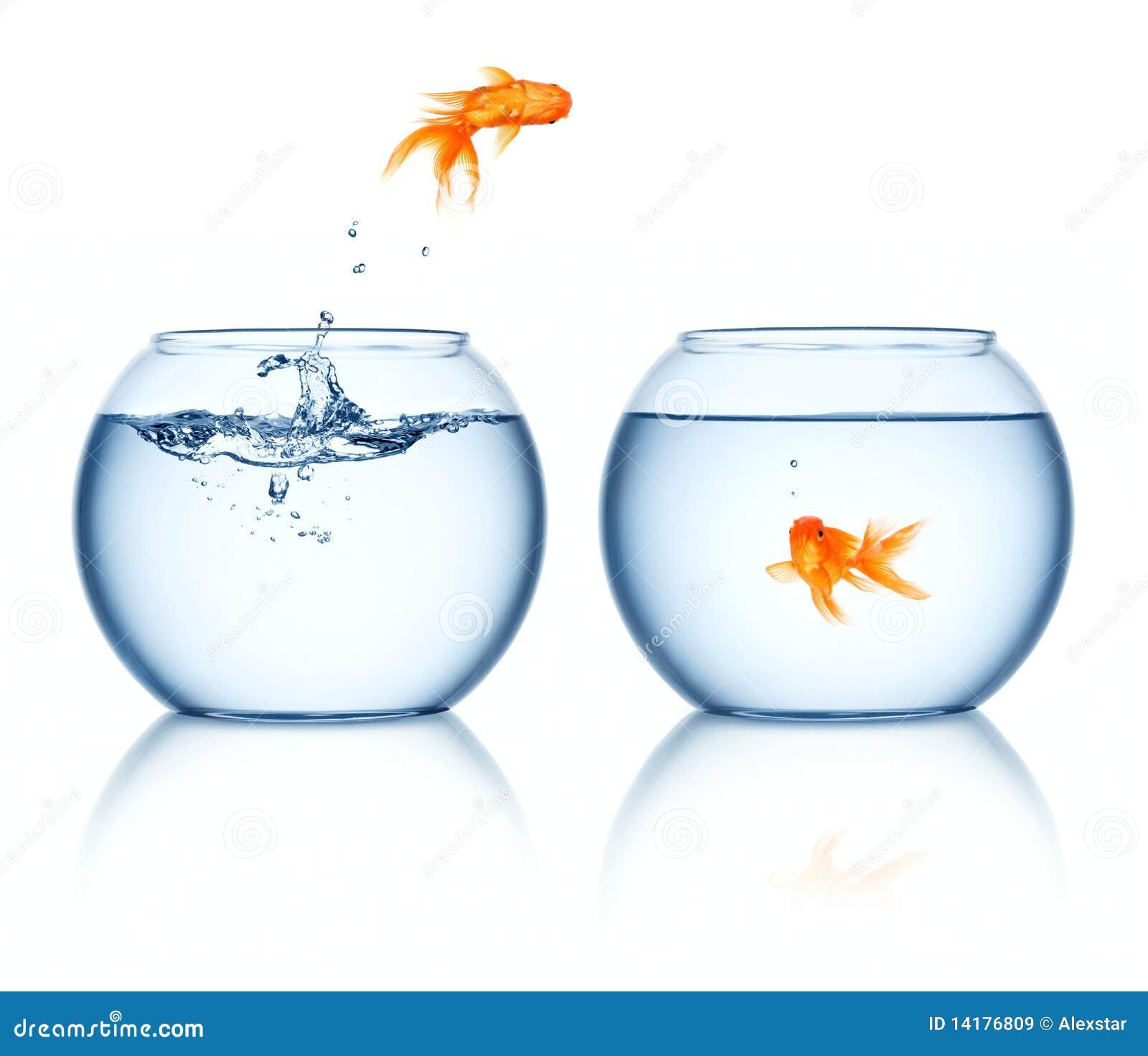 Bacia saltando do Goldfish