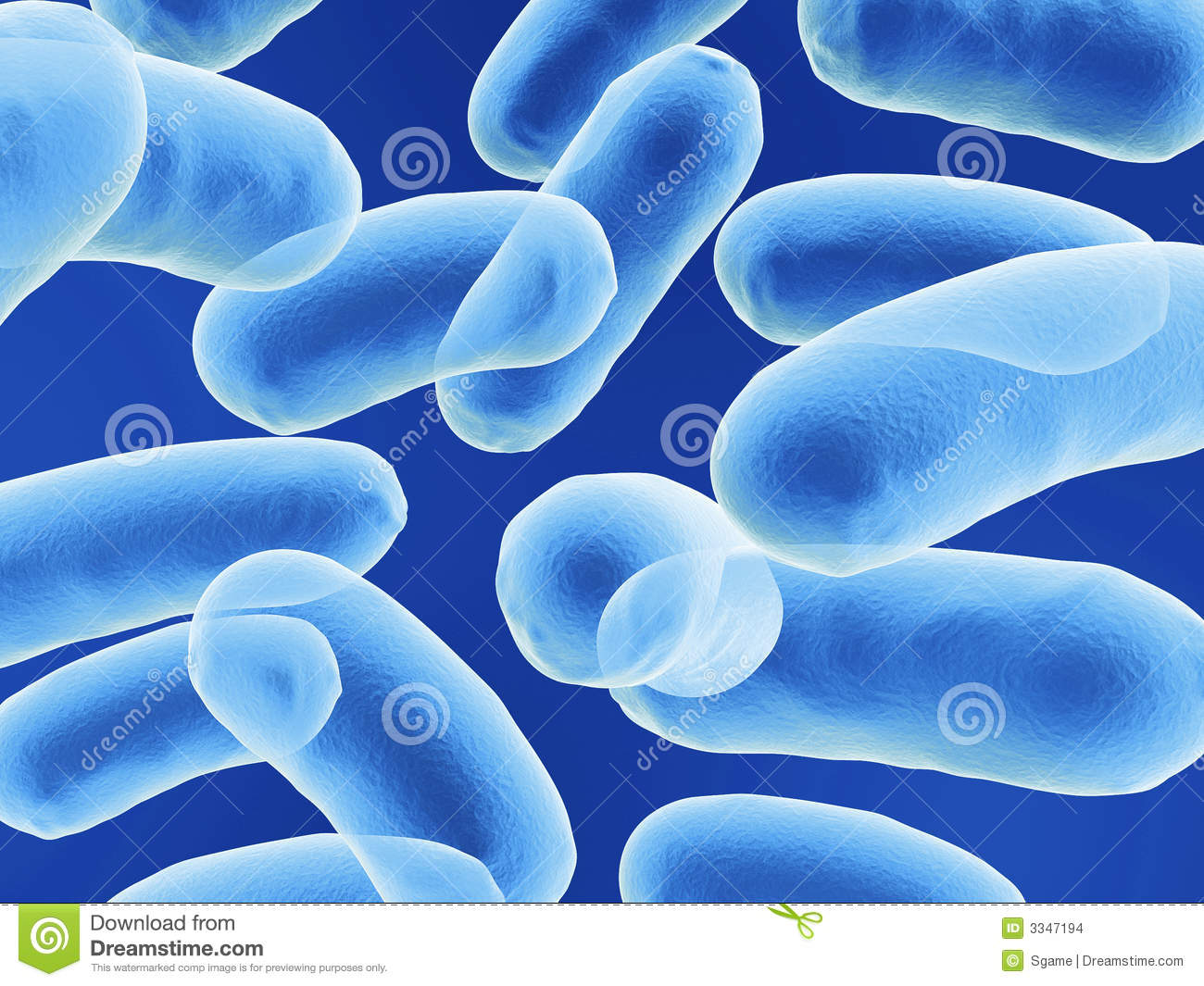 Bacillus Bacteria Stock Images - Image: 3347194