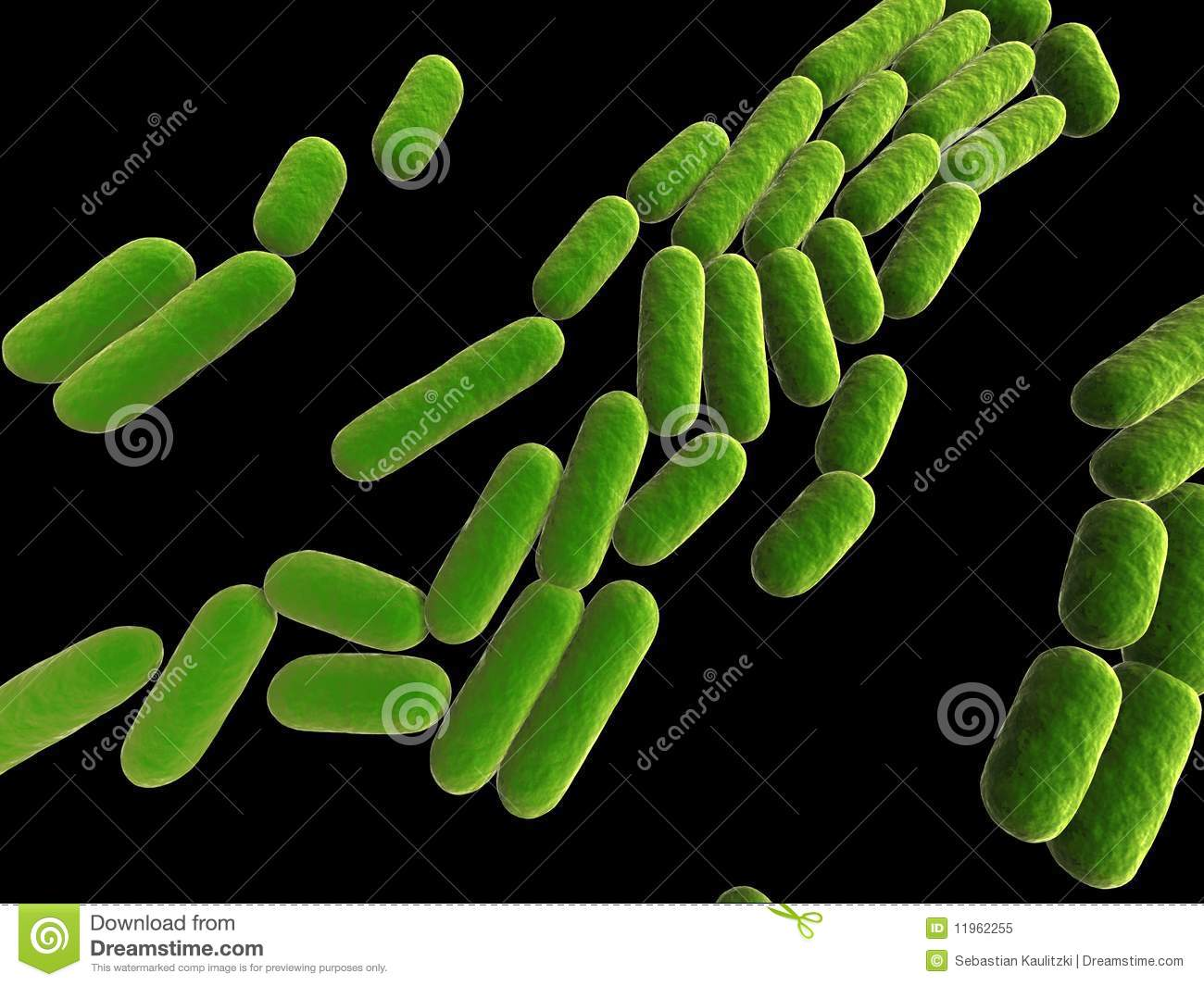 Bacillus Subtilis Royalty Free Stock Photo - Image: 11962255