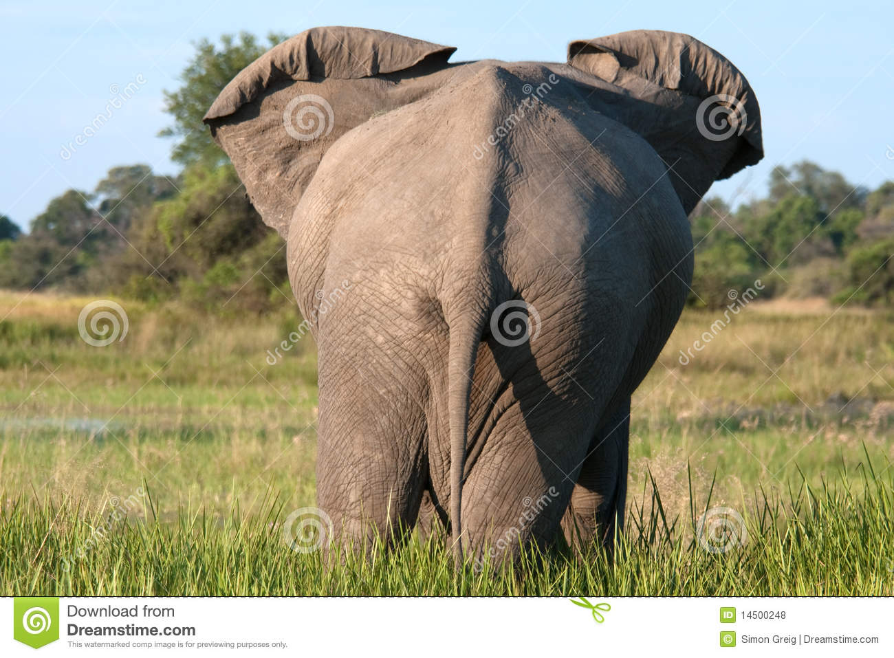back end of an elephant royalty free stock photos